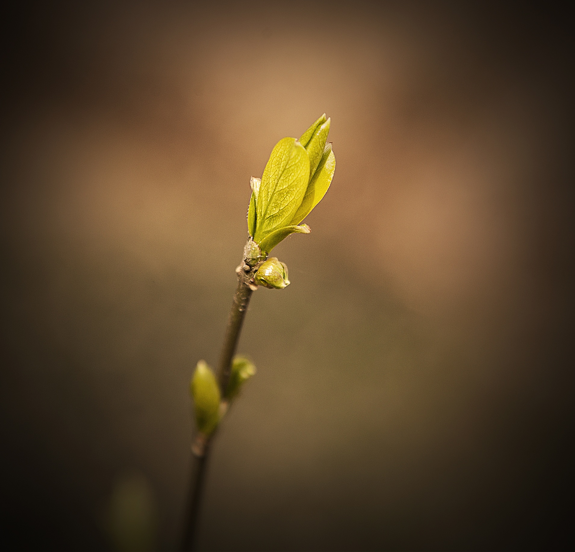 new life by leonard.petraru