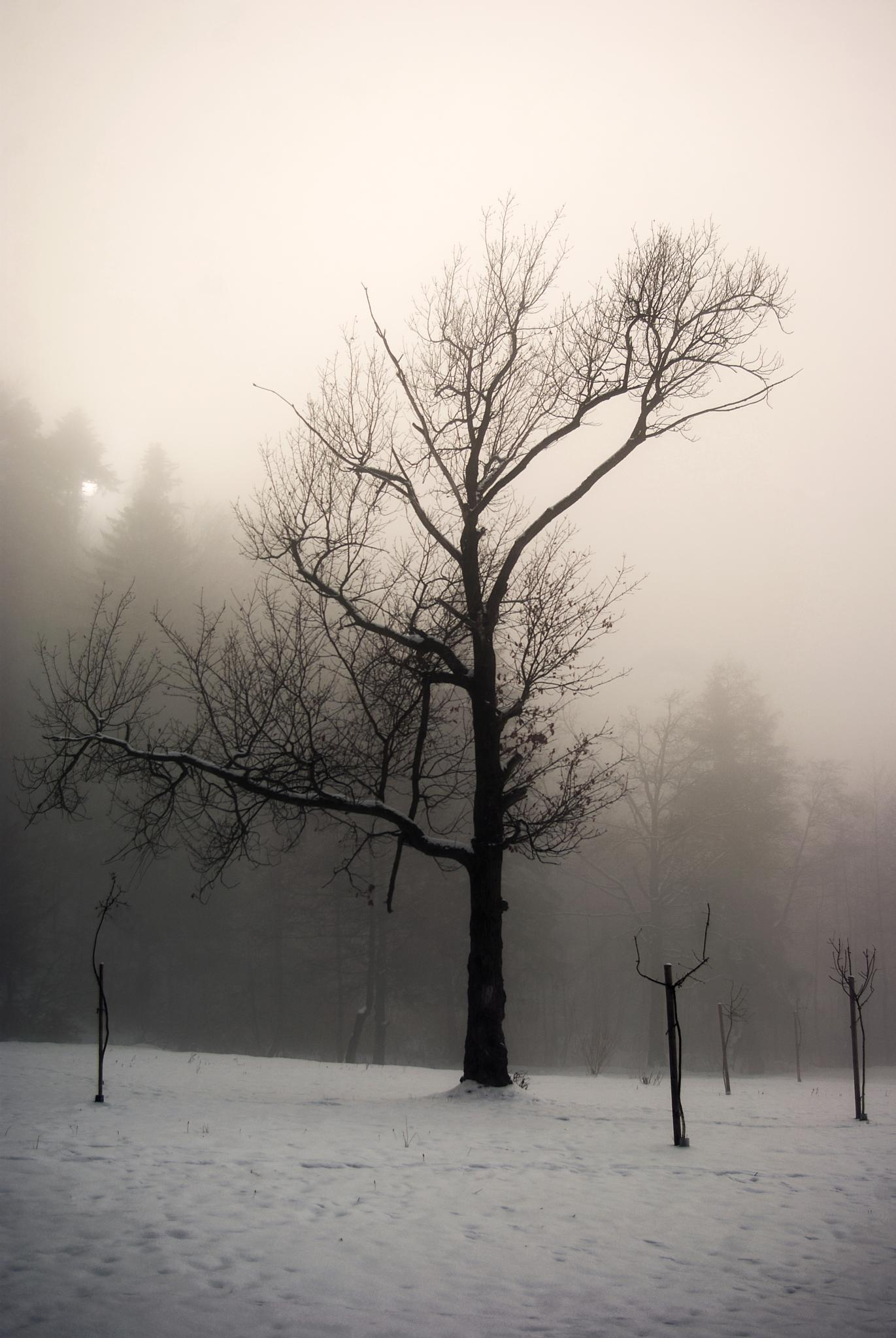 fog and graphics ... by leonard.petraru