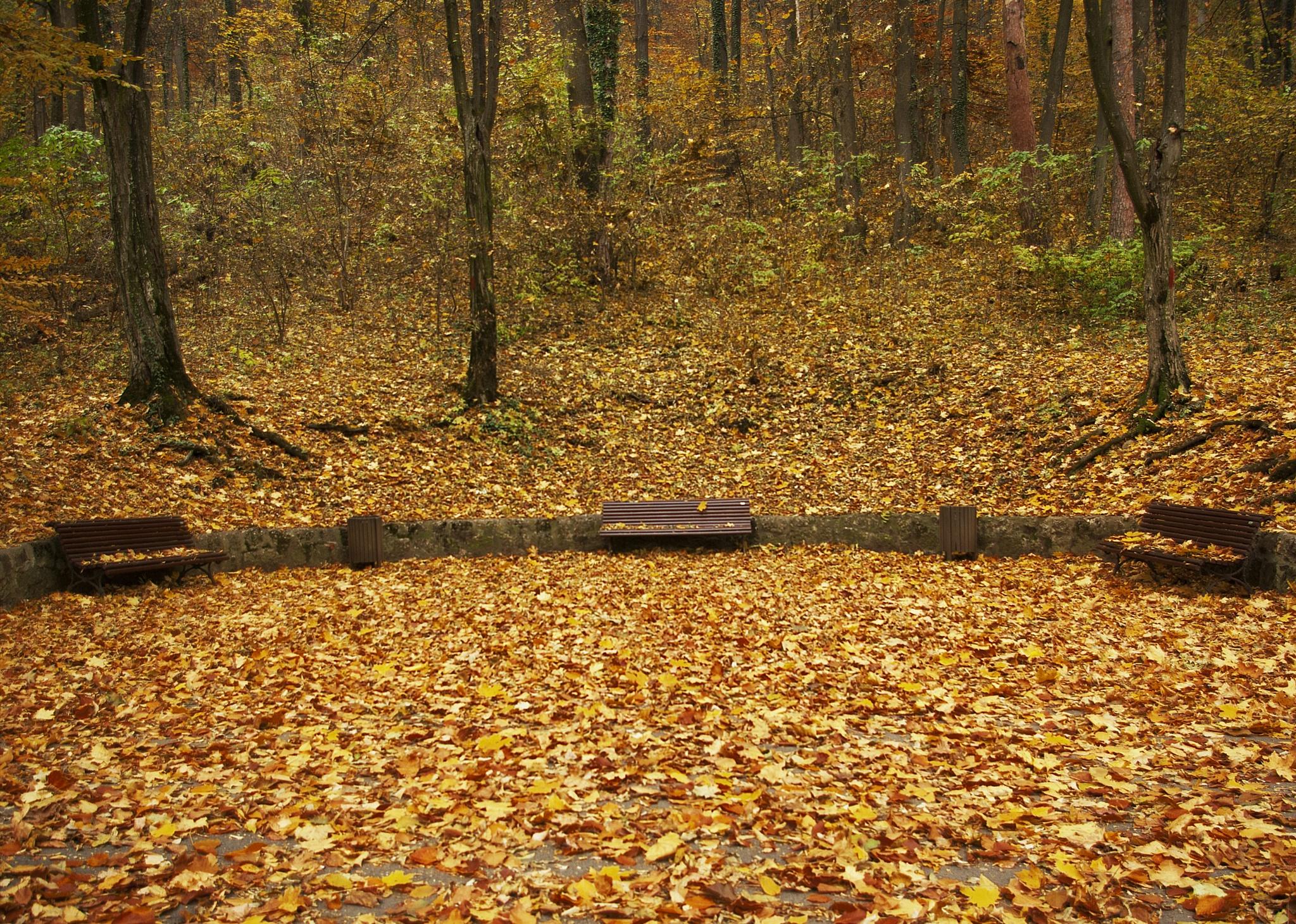 autumn 01 by leonard.petraru
