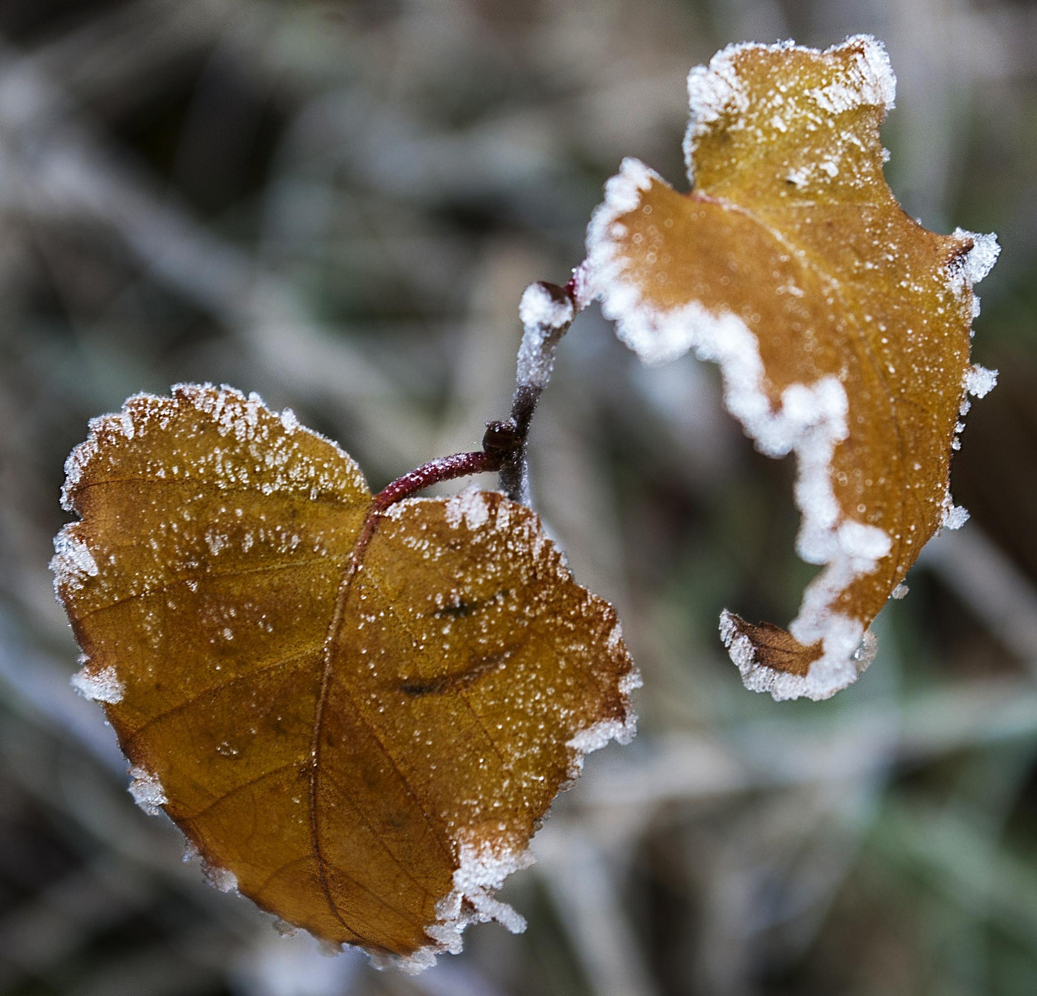 frozen 2 by leonard.petraru