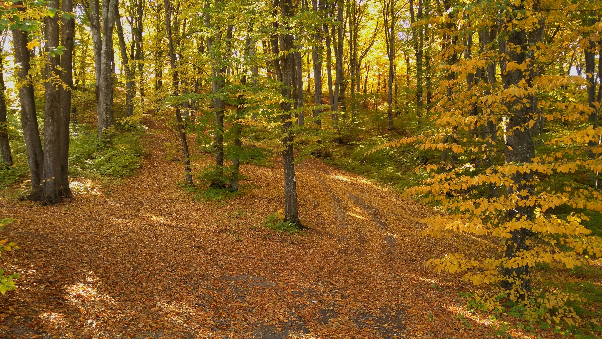 Autumn colors by leonard.petraru