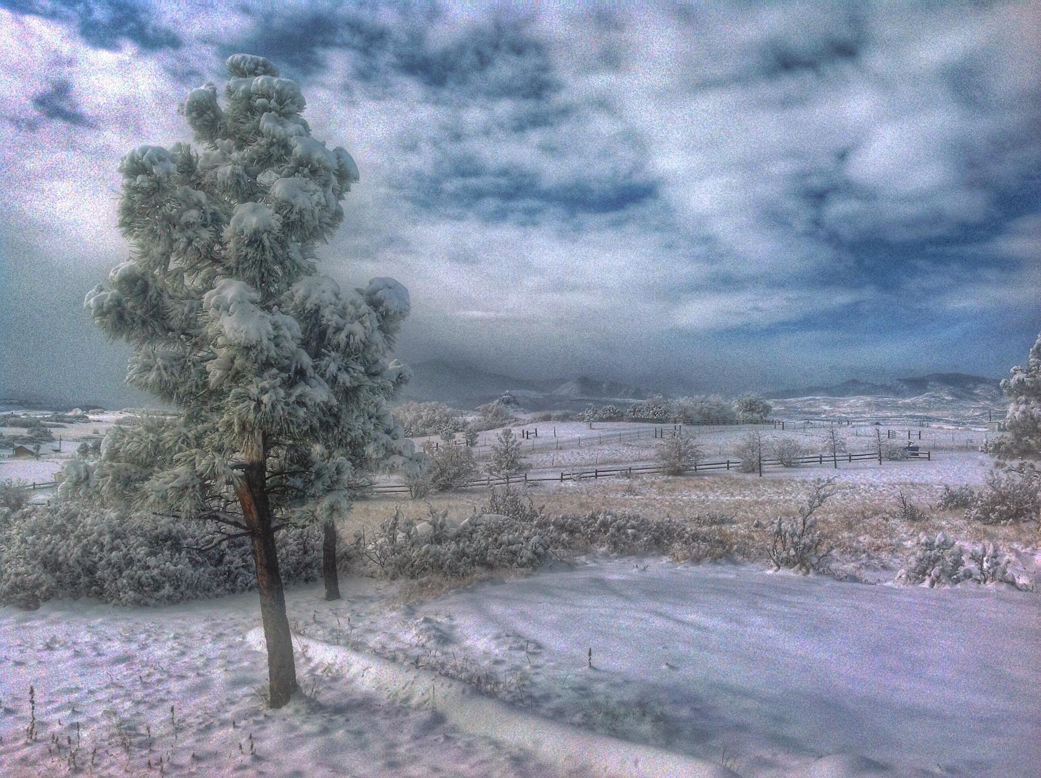 Snow scene by Lori A. Utley