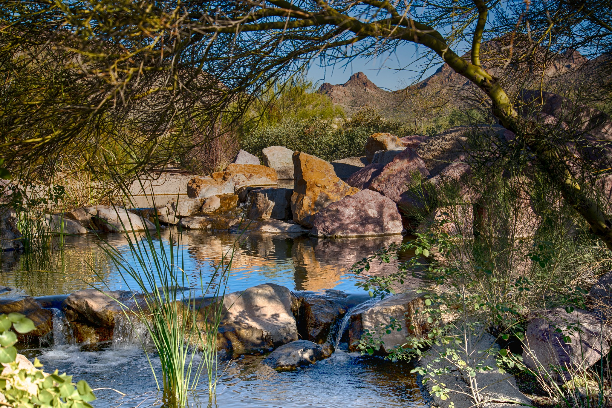Desert Oasis by Artistic Ambitions