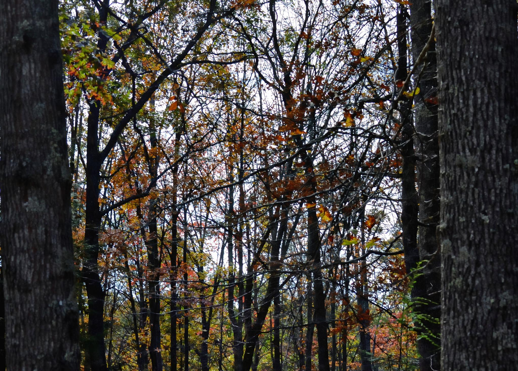 In the Woods by lindandarrell