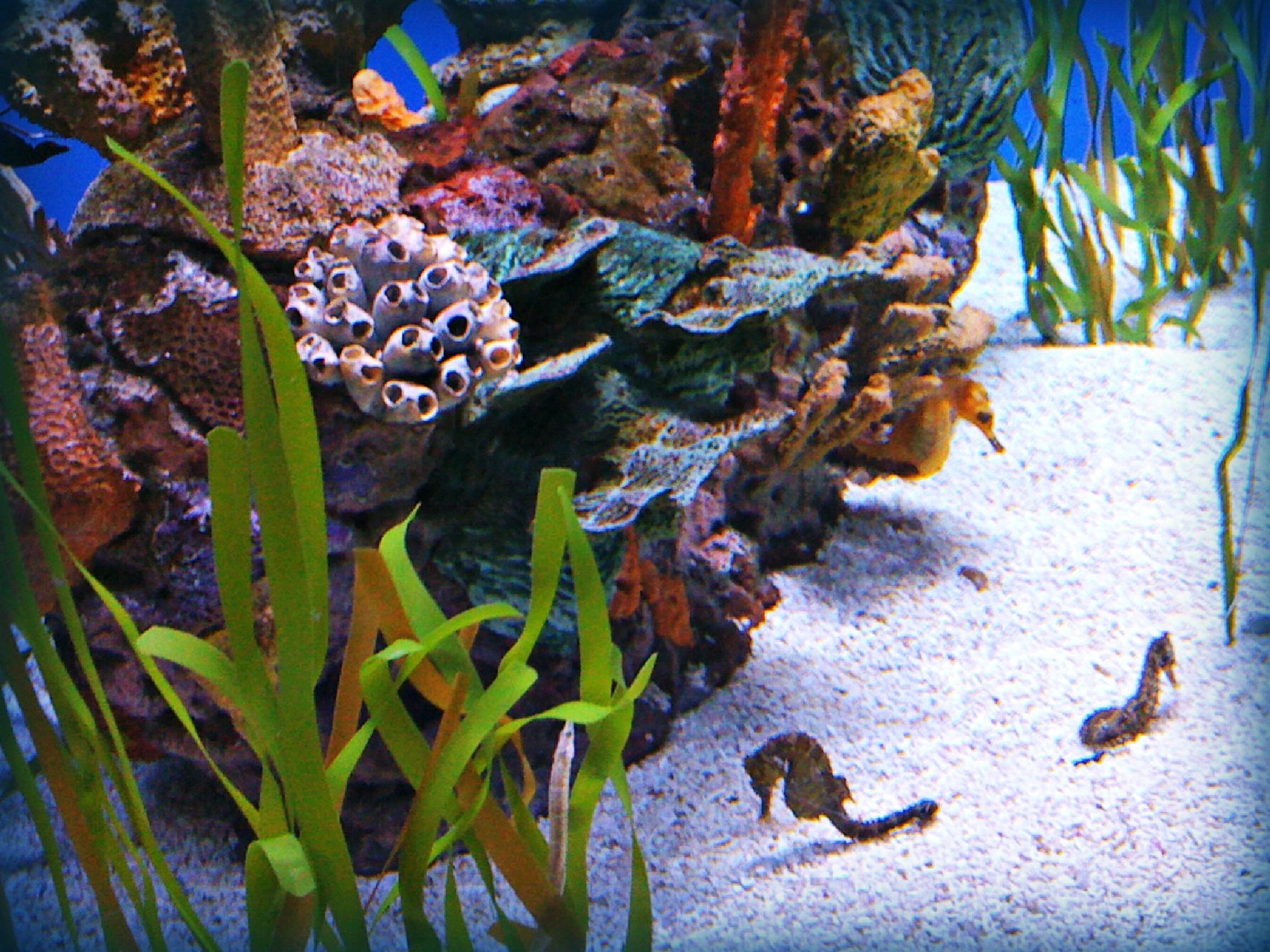 Seahorse's by lindandarrell