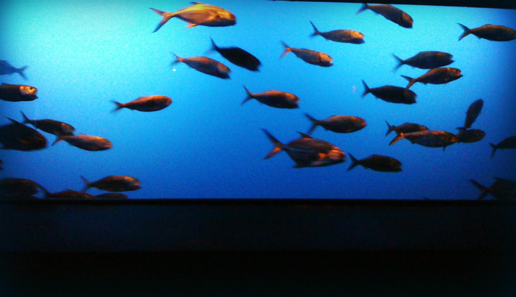 School of Fish by lindandarrell