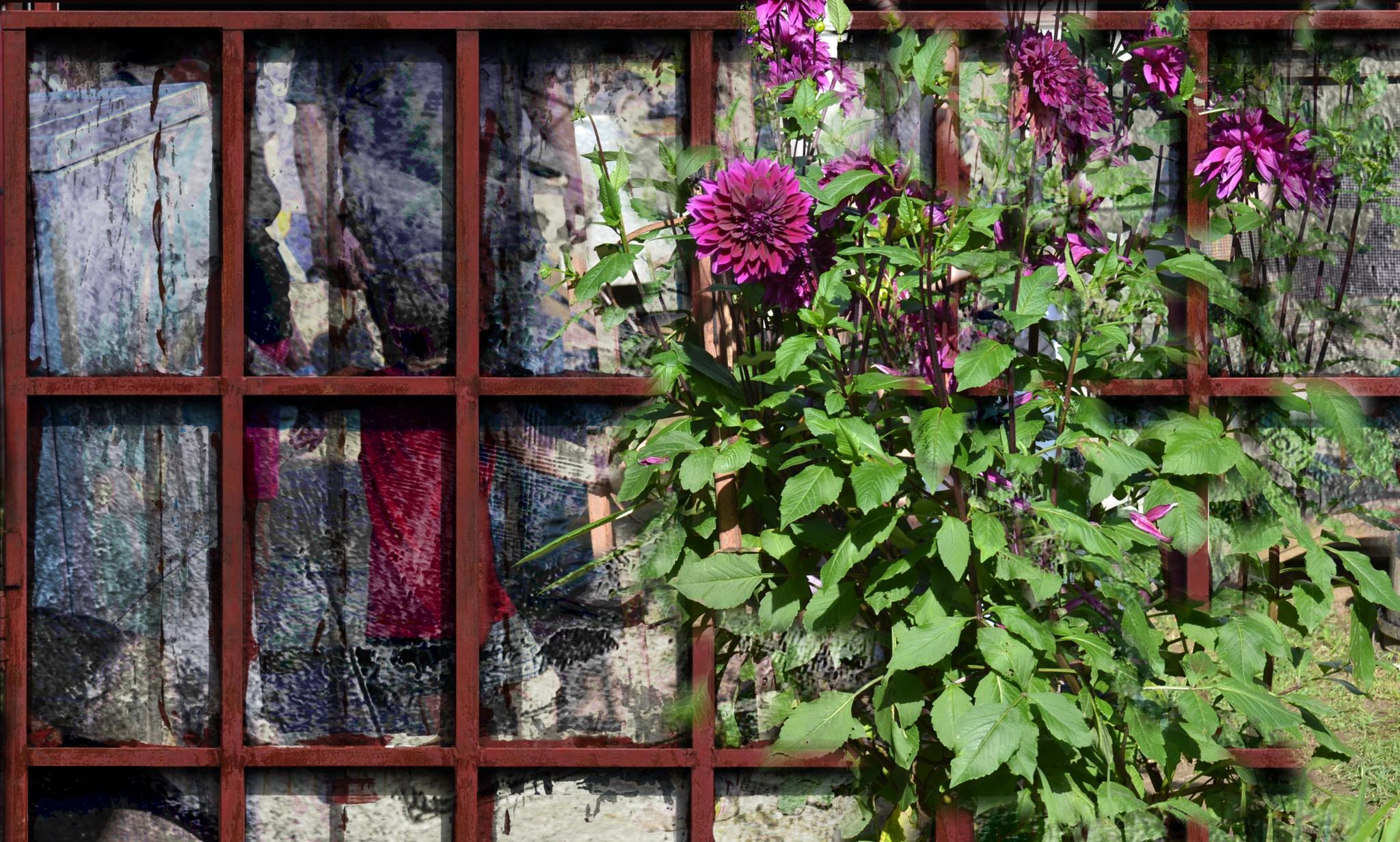 Purple Flowers by lindandarrell