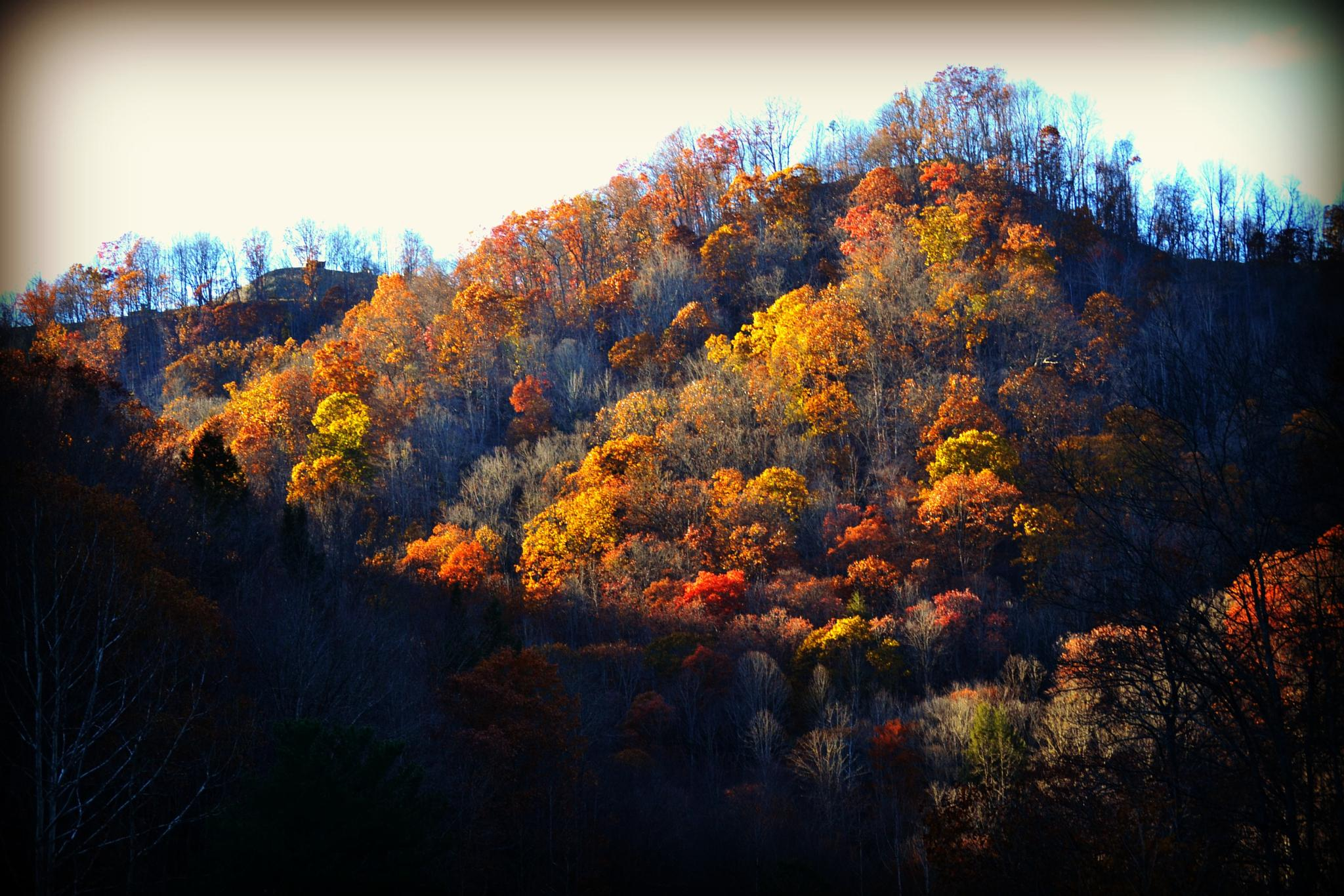 My Beautiful Mountains..Sweet Home West Virginia by lindandarrell