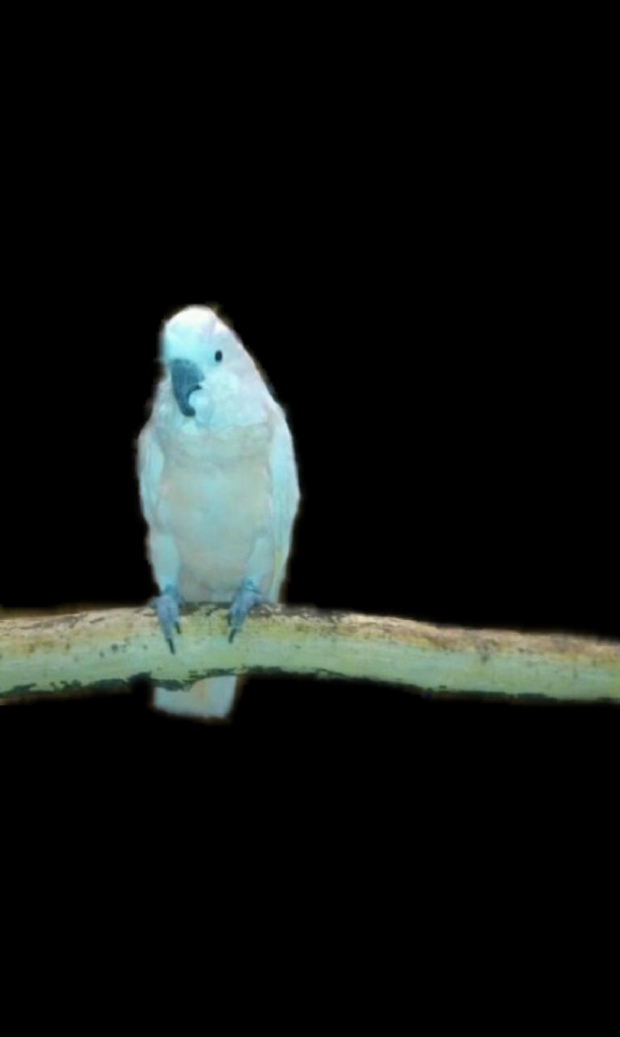 Parrot by lindandarrell