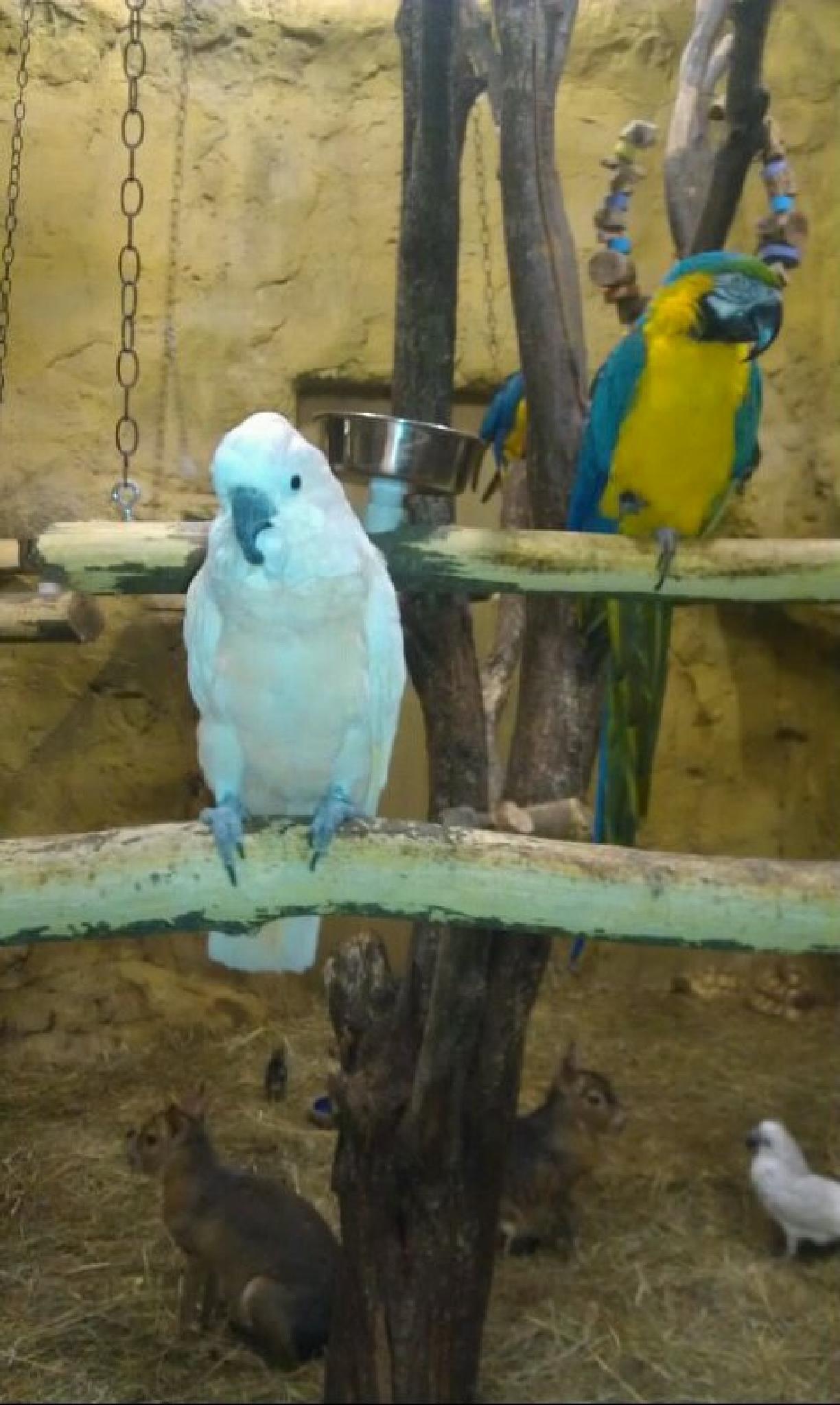 Parrots by lindandarrell