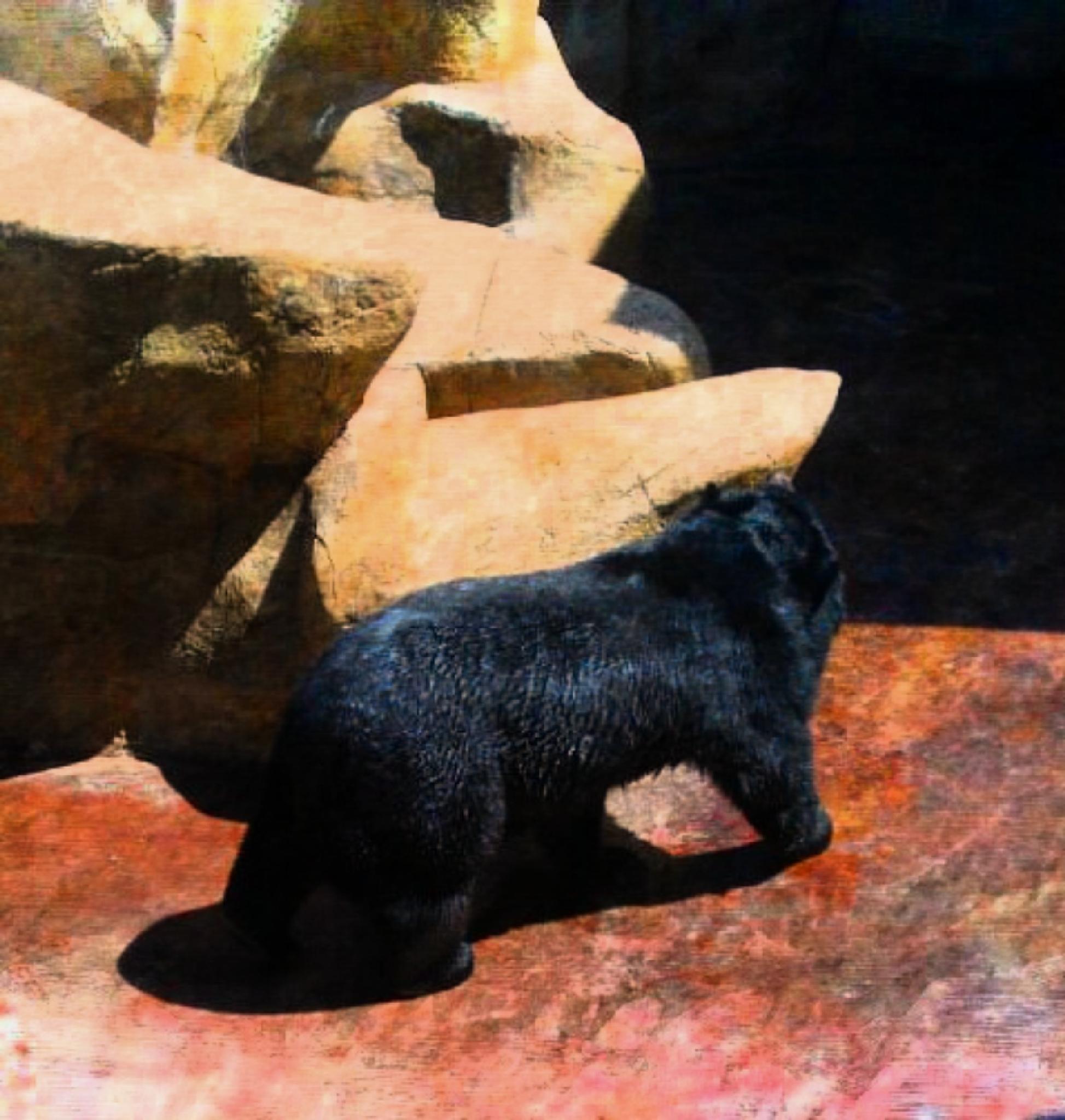 Black Bear by lindandarrell