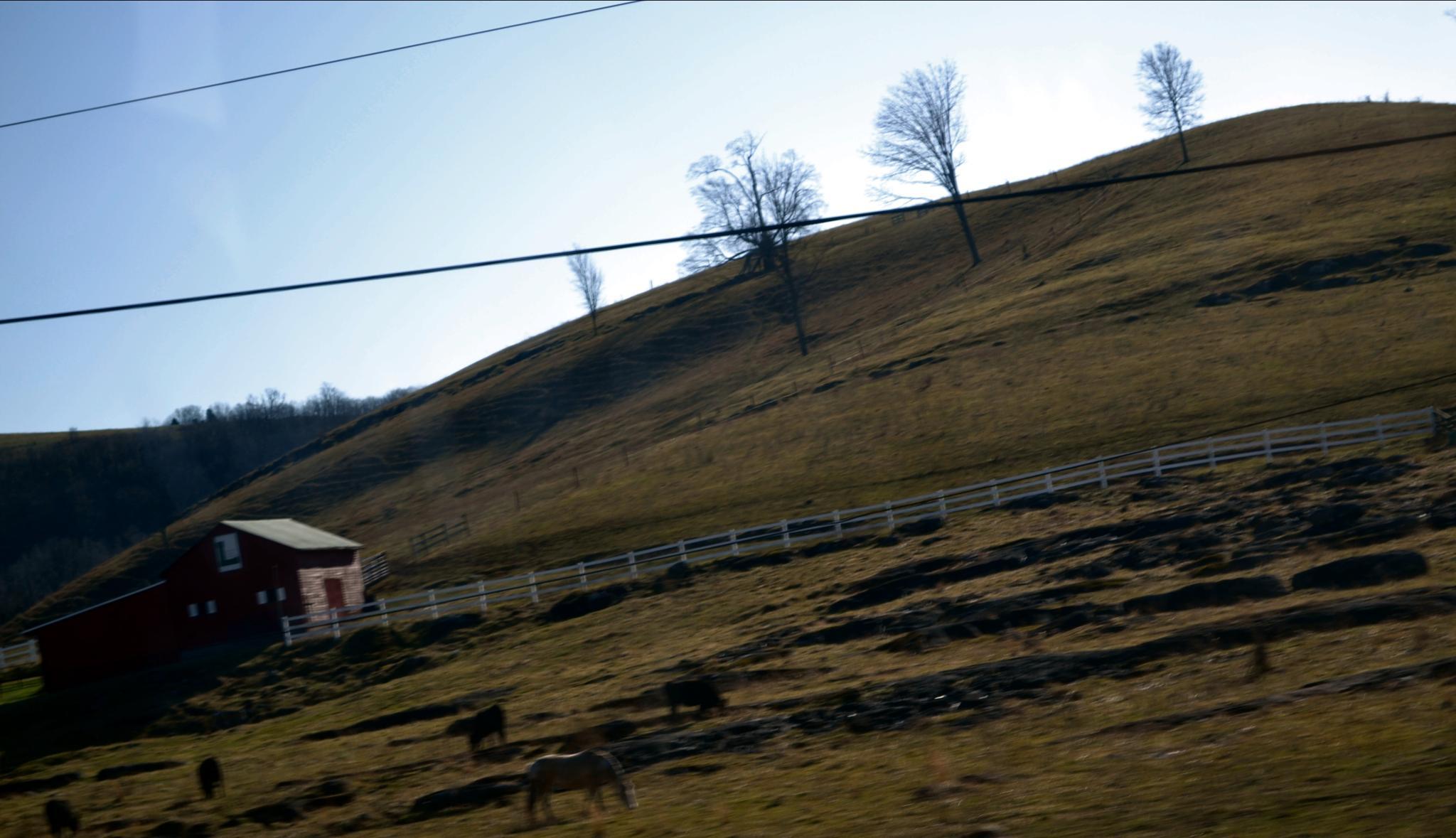 Barn and Horses by lindandarrell