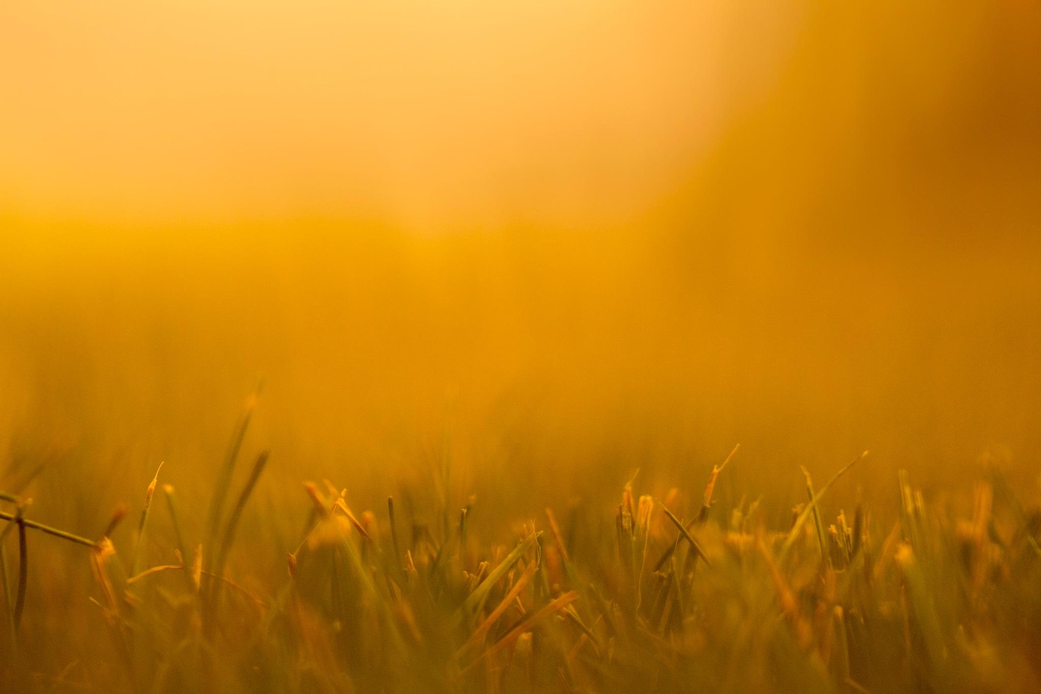 Grass by Mattias Carlsson
