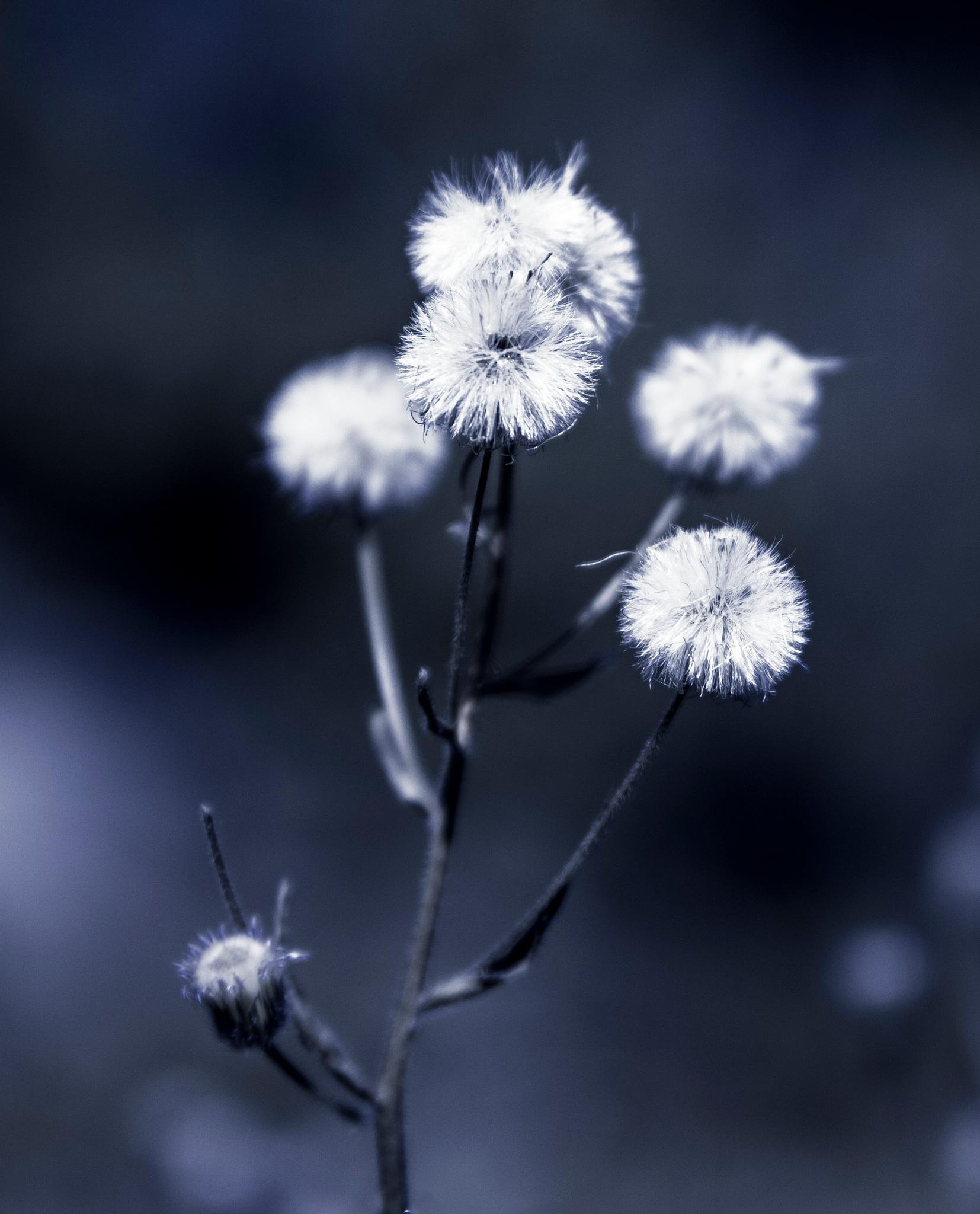 Flowers by Mattias Carlsson