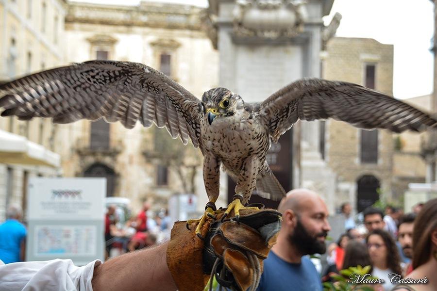 Falco ali aperte by Mauro Cassarà