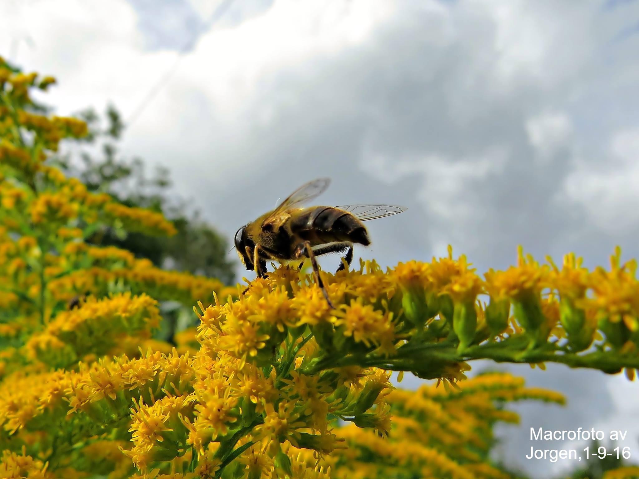 Wasp by hans.j.svensson