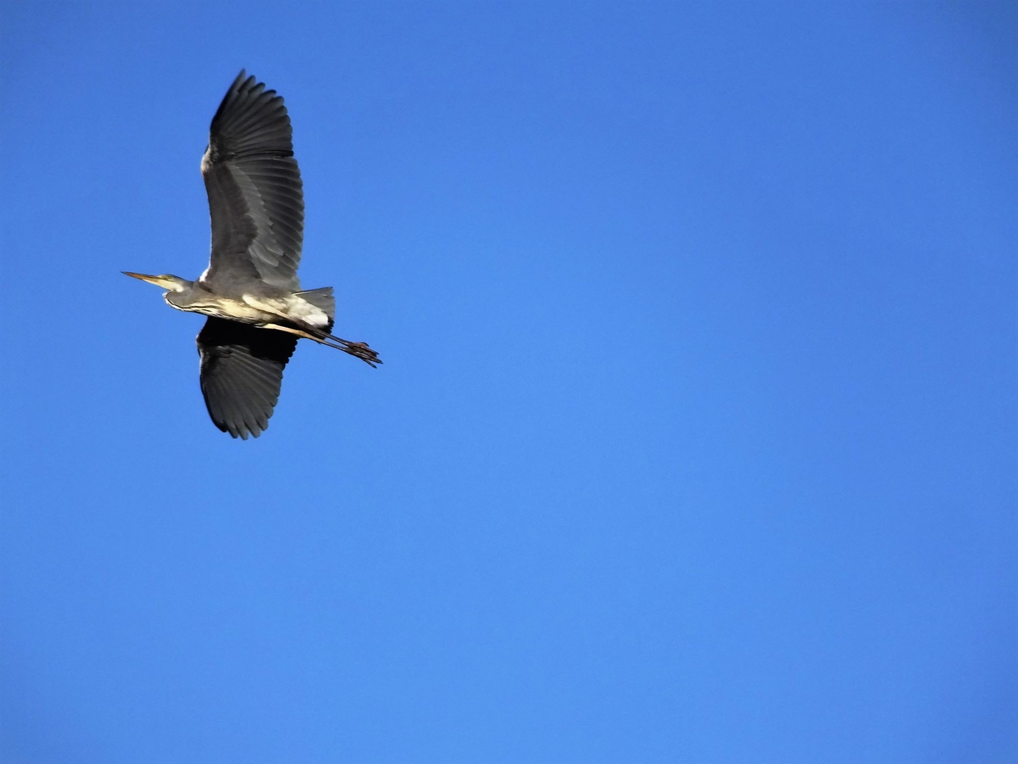 Free lika a Bird by hans.j.svensson