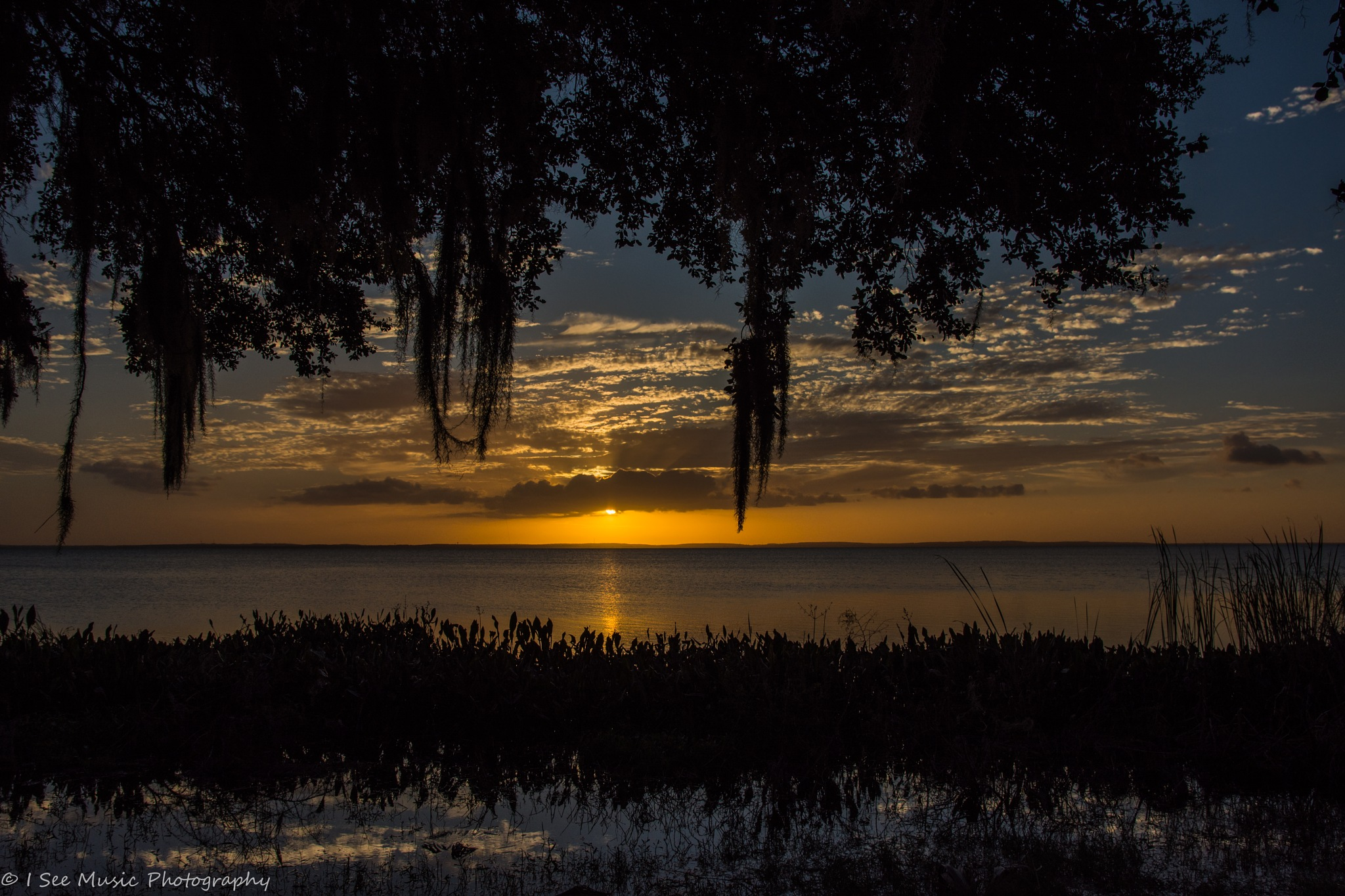Magnolia Park Sunset by khristyp