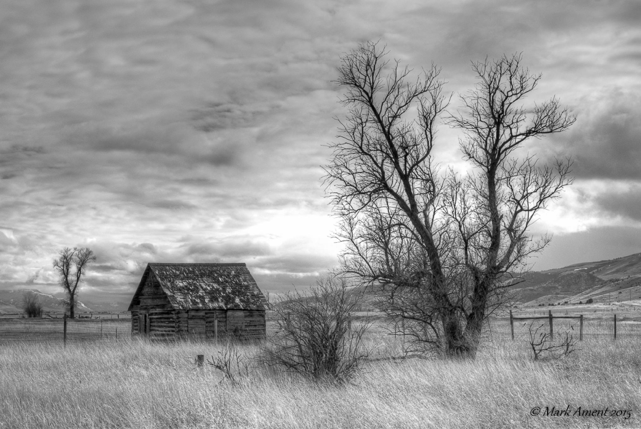 Cottonwood Cabin by mark.a.ament