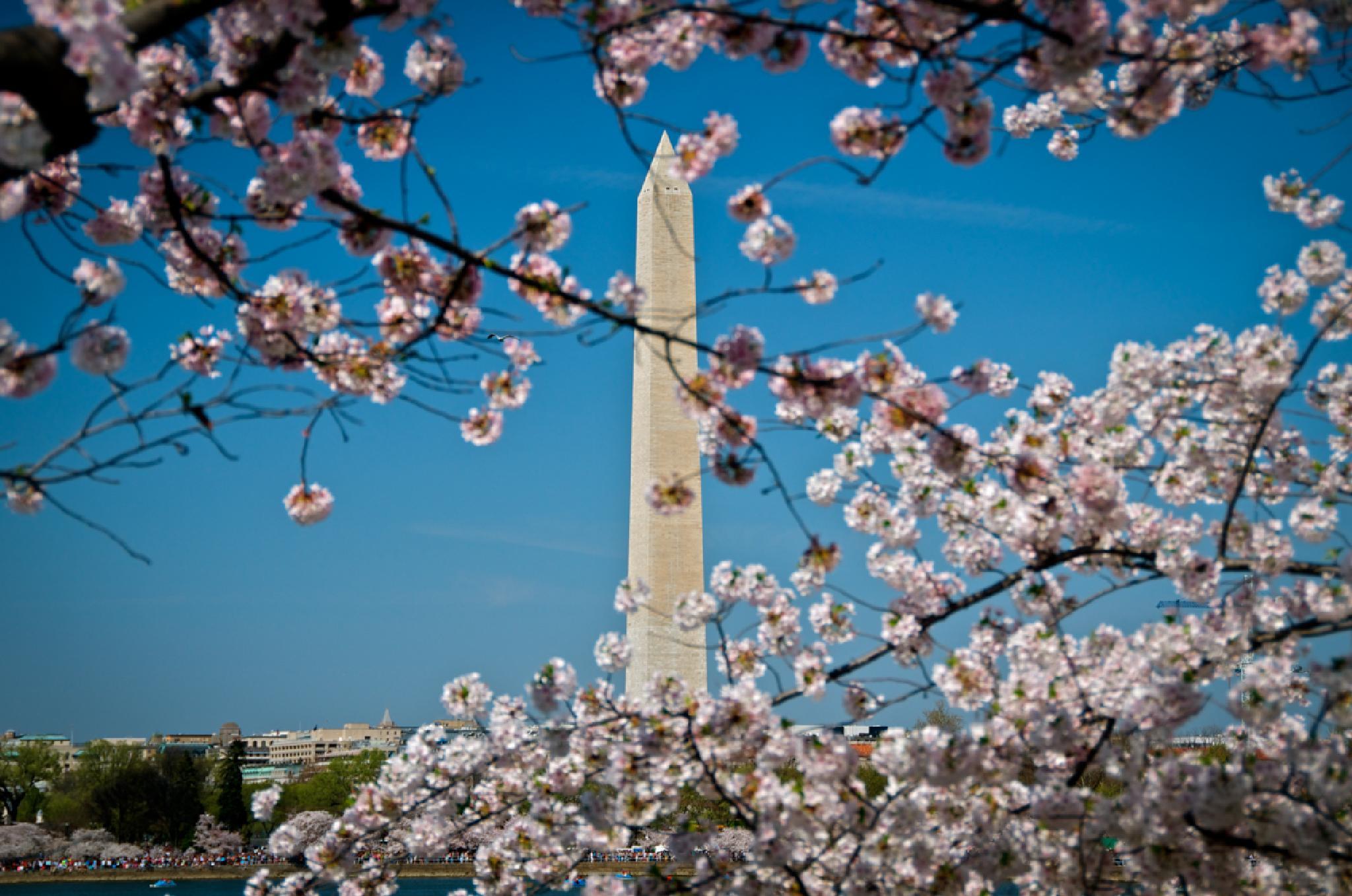 Washington Monument in Washington DC by munacra