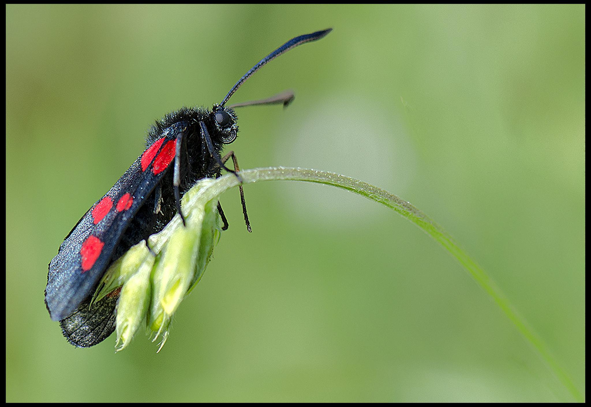 moth by angela.taylor.142035