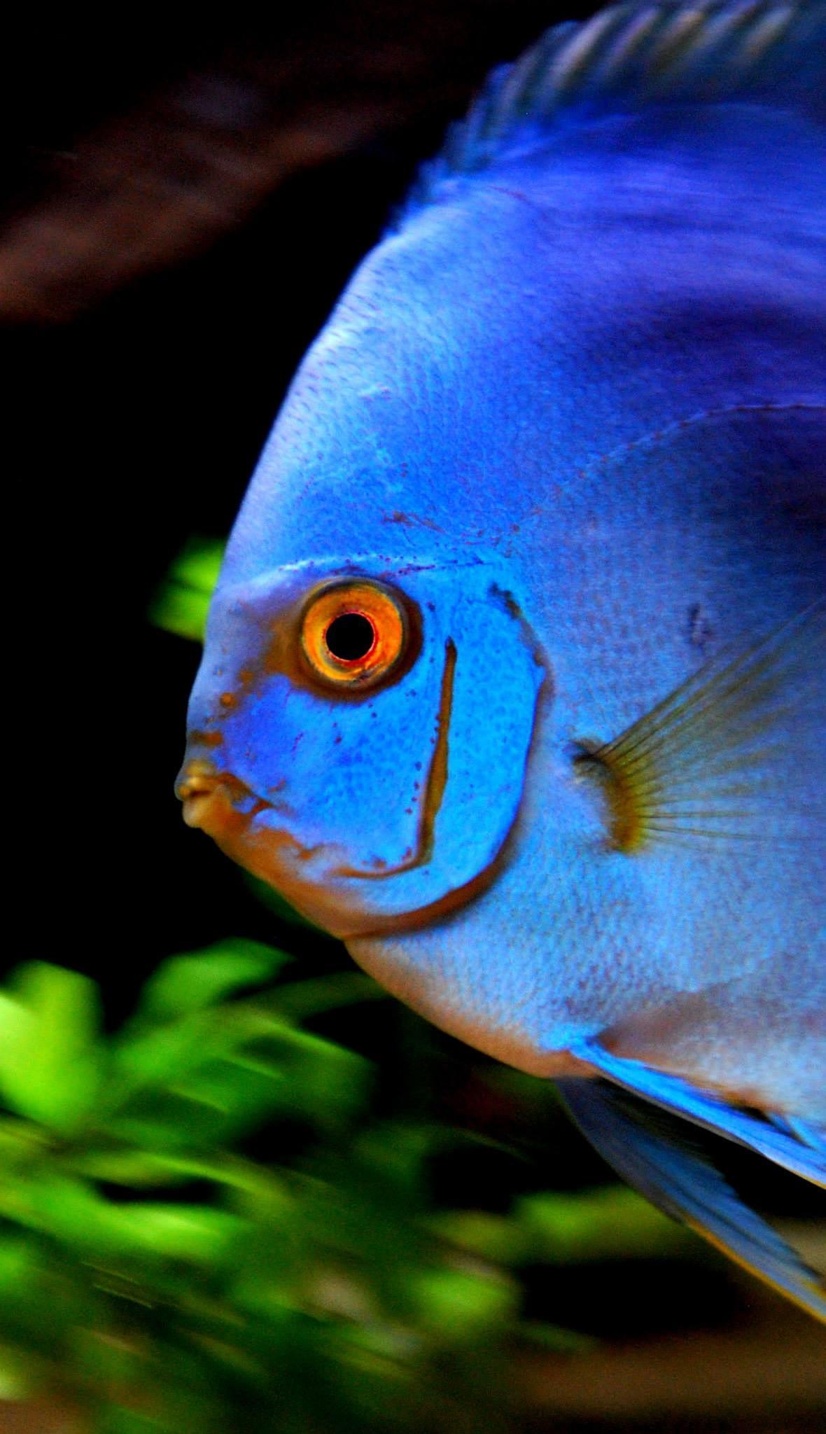 Photo in Animal #diskus #blue diamond