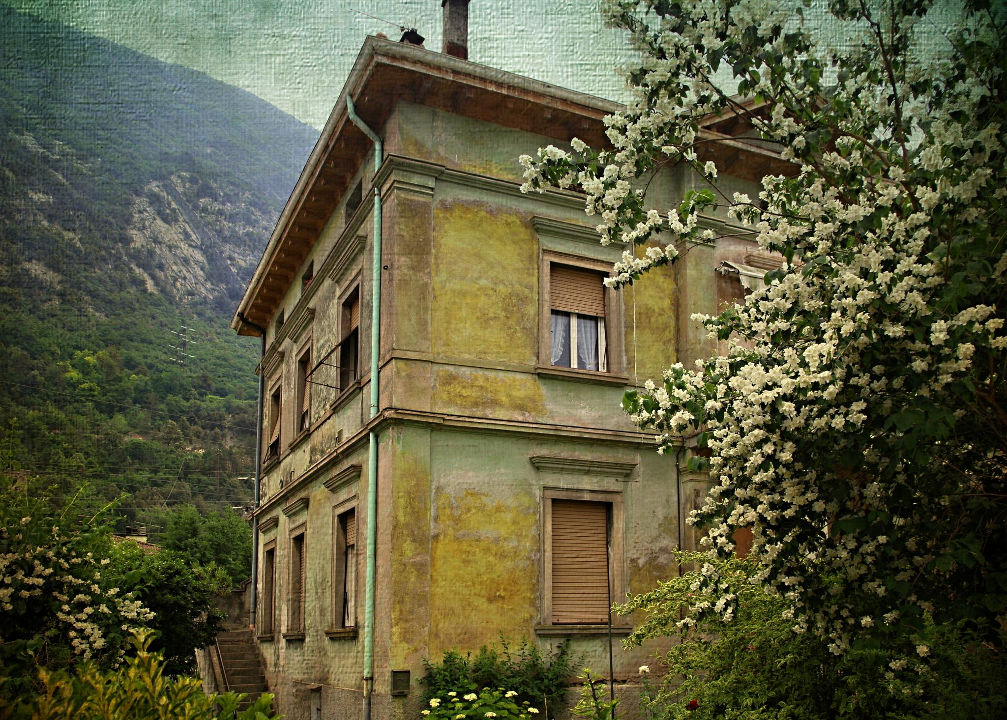 old house with jasmine by berberhoving