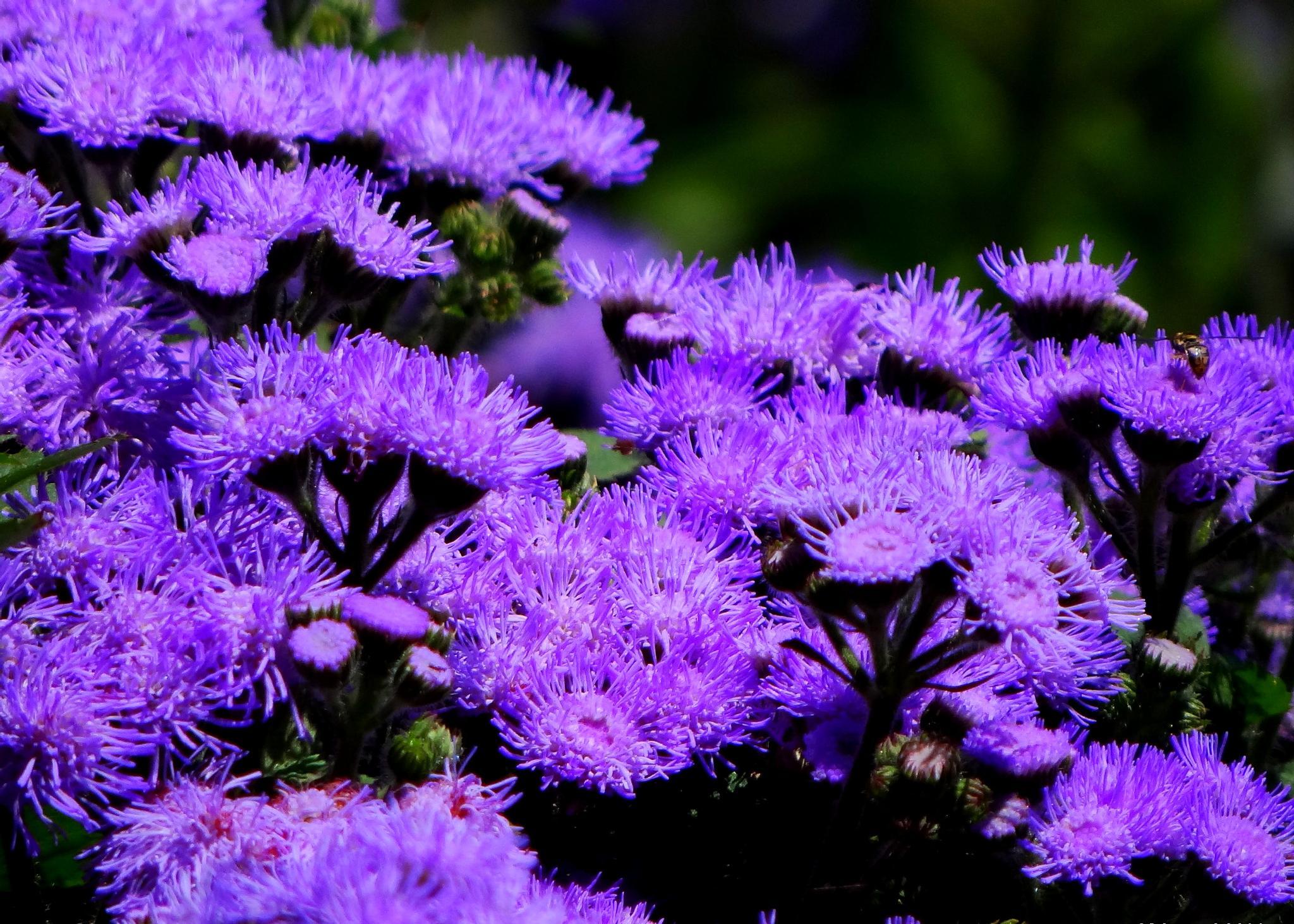Purple by paulette.king