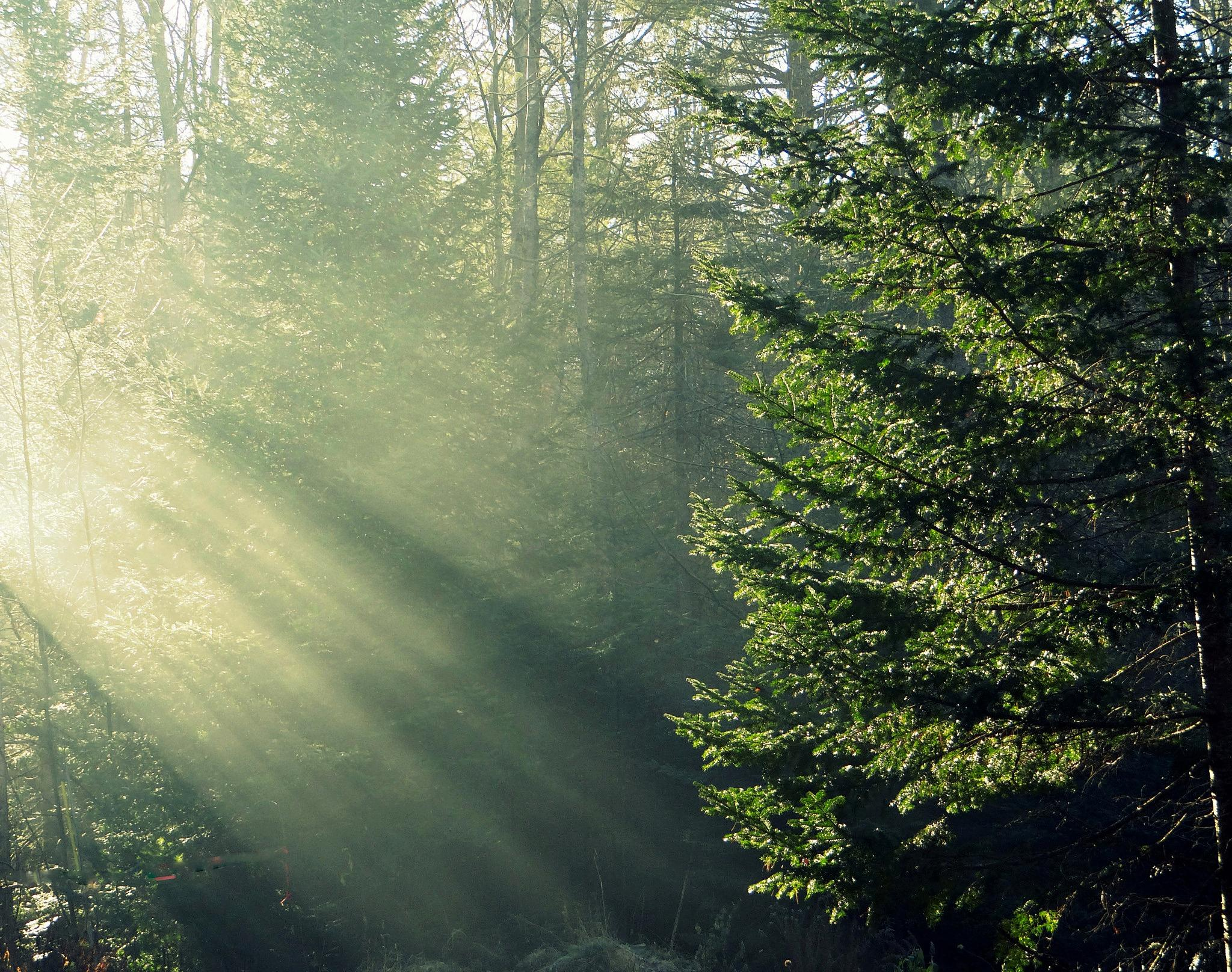 Morning Rays by paulette.king