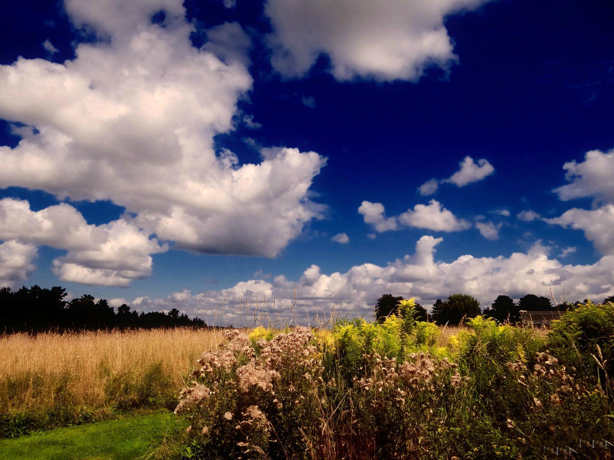 Puffy Clouds and Fields by paulette.king