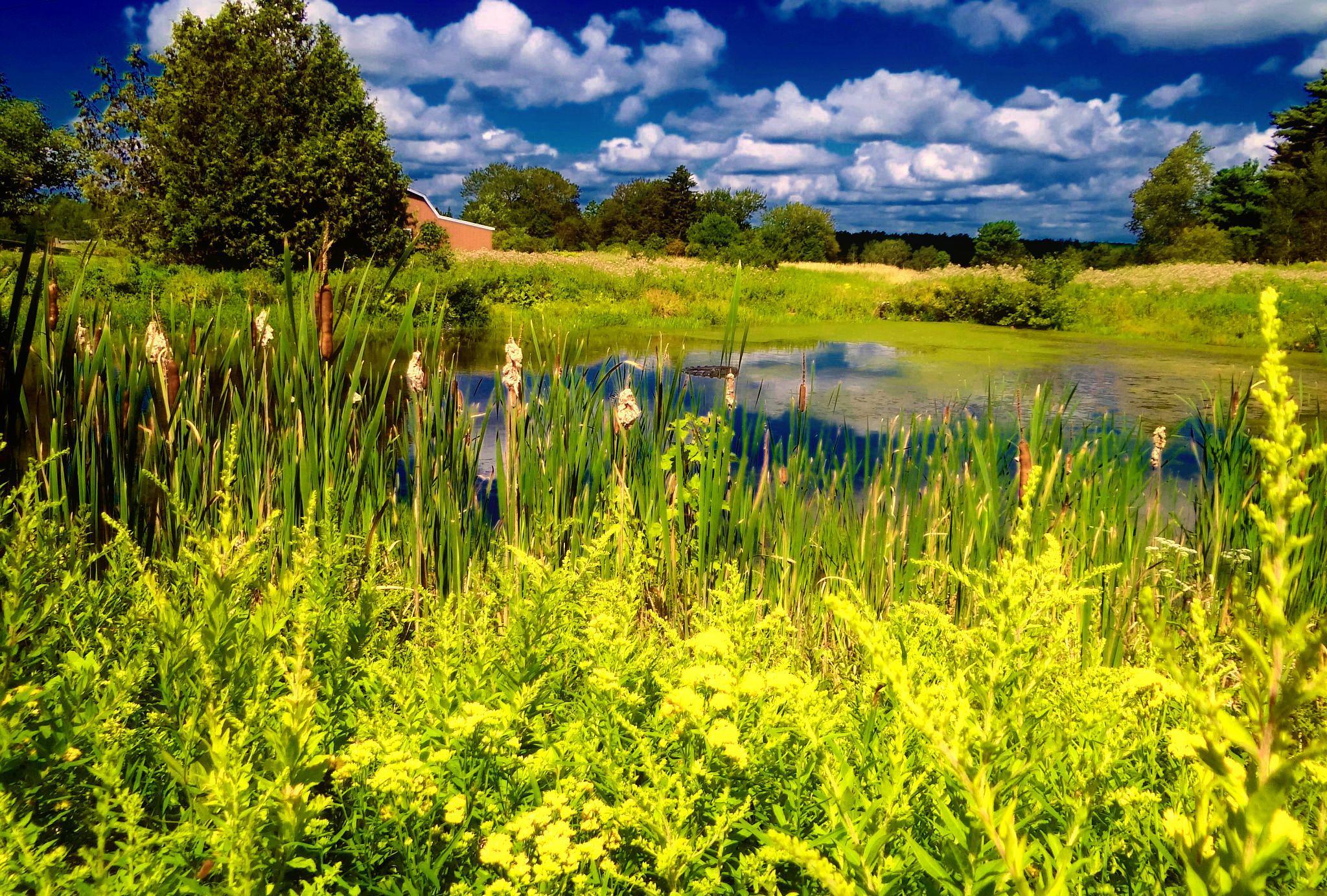 Photo in Rural #summer #summer in maine #fields #sunny skies #deep blue skies