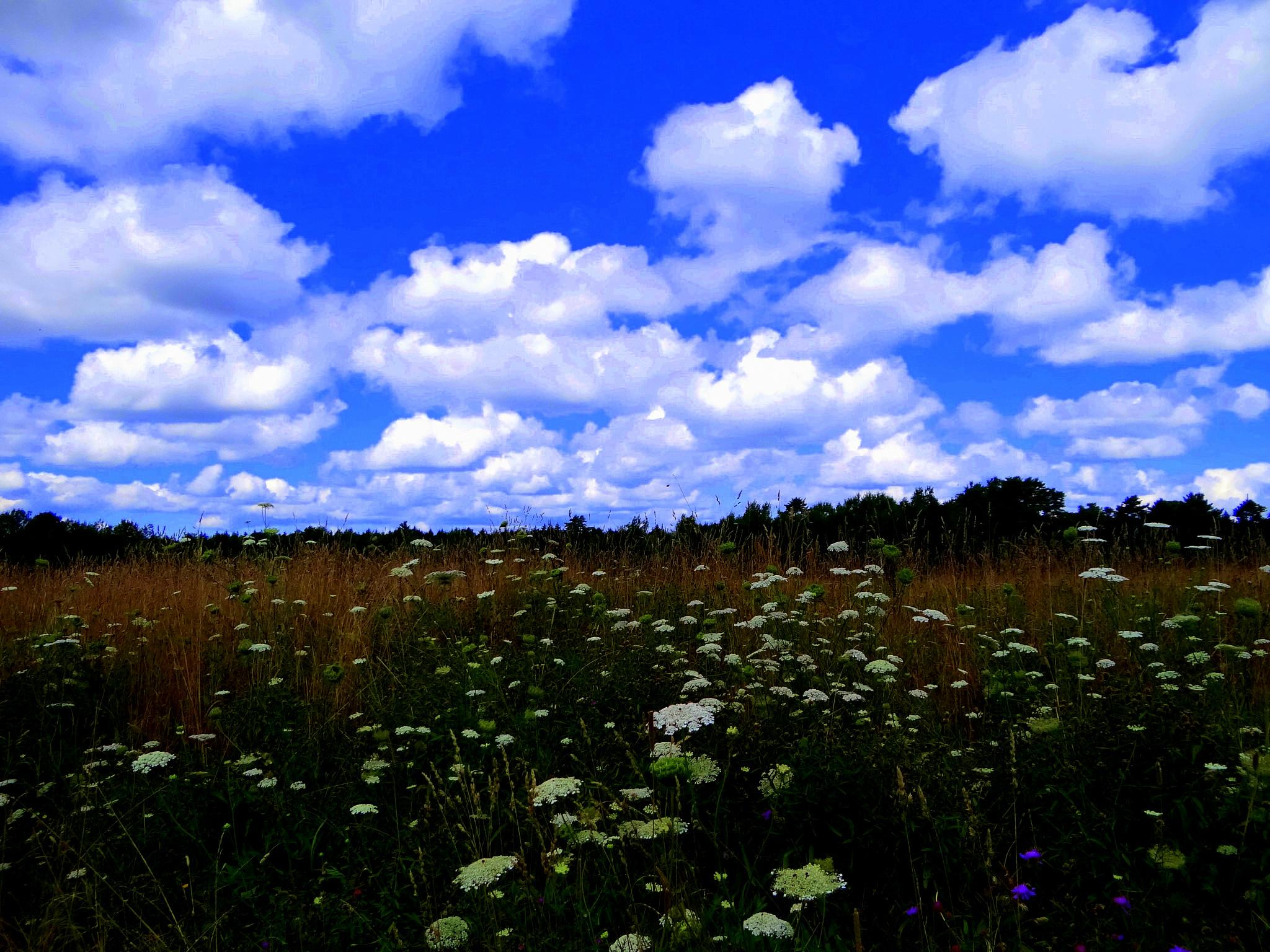 Clouds and Wildflowers by paulette.king