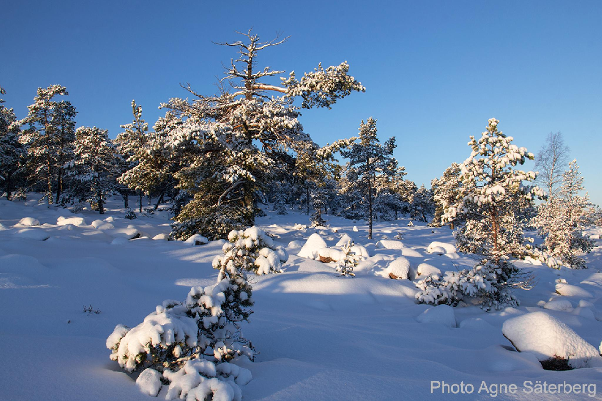 Winter in the High Coast World Heritage, Sweden! by Agne Säterberg