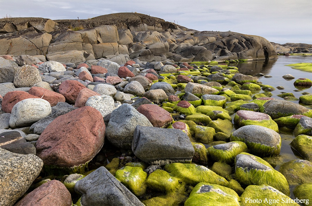 Colors in the High Coast World Heritage by Agne Säterberg