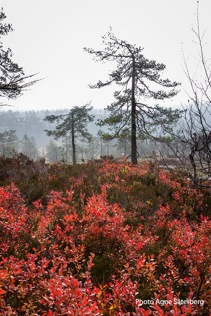 Out on hiking in the High Coast World Heritage by Agne Säterberg