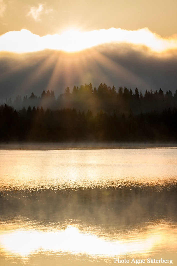 morning sun by the misty lake by Agne Säterberg