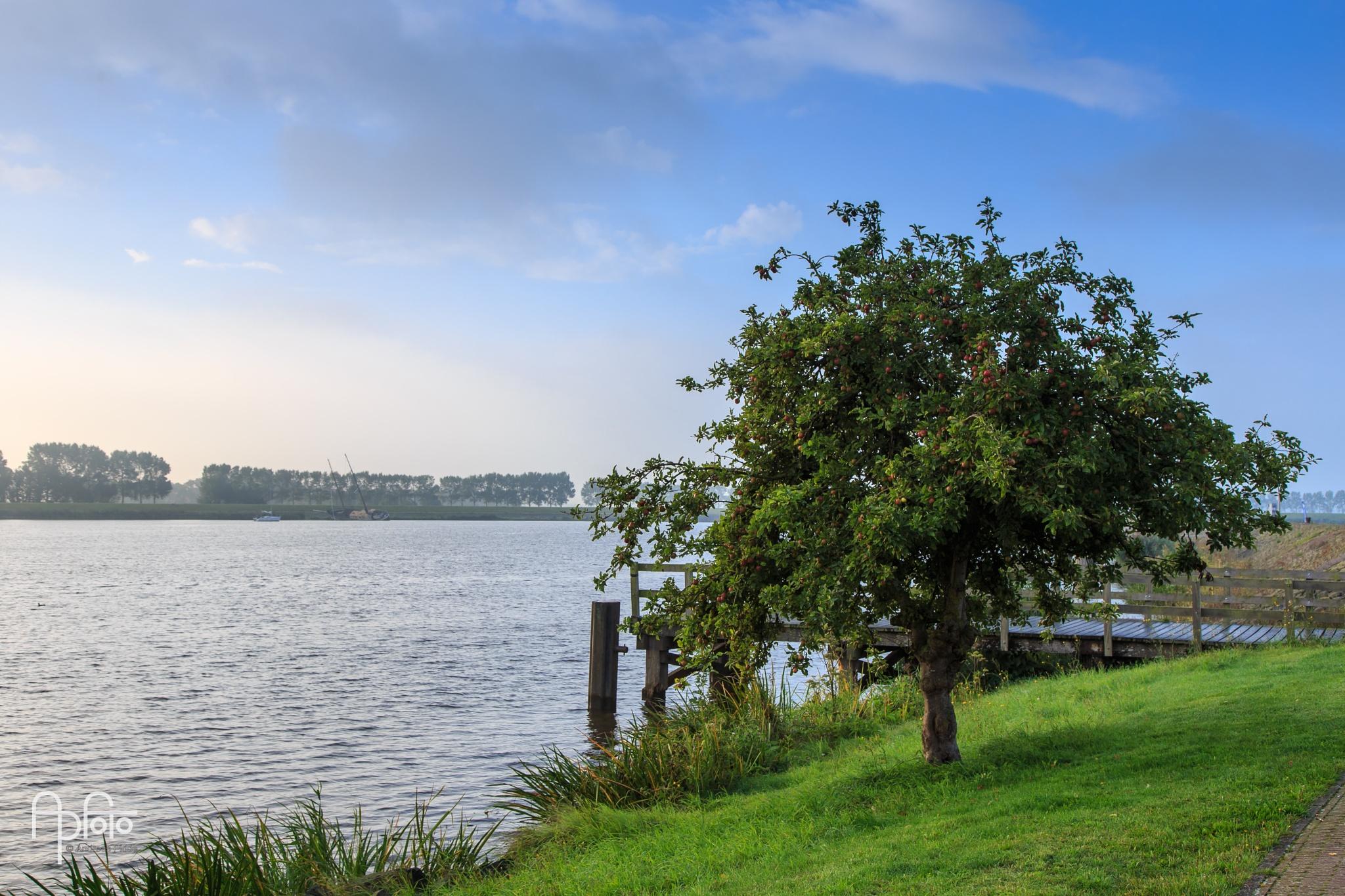 Tree at the Dam by Andreas Pidde