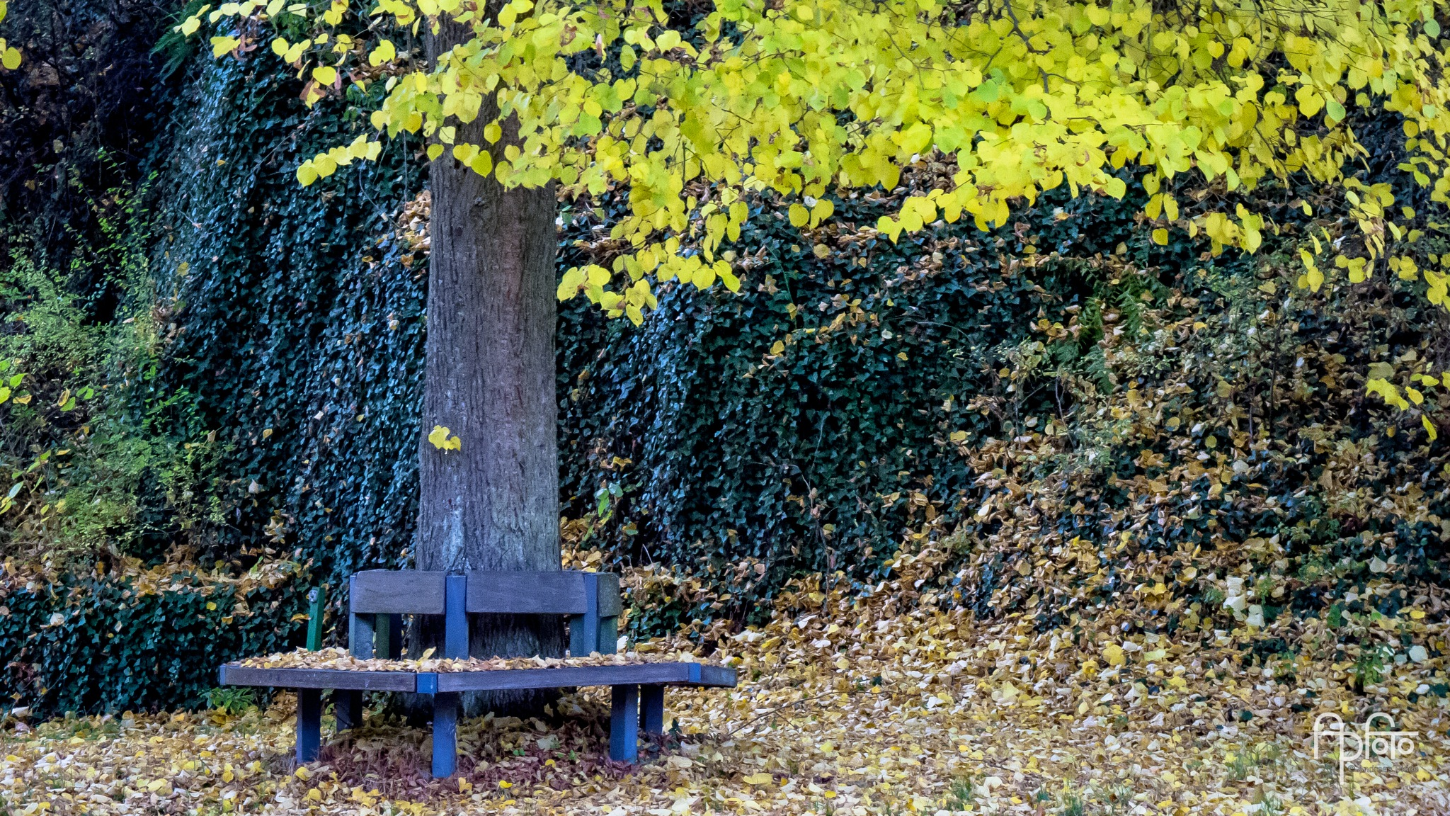 The bench by Andreas Pidde