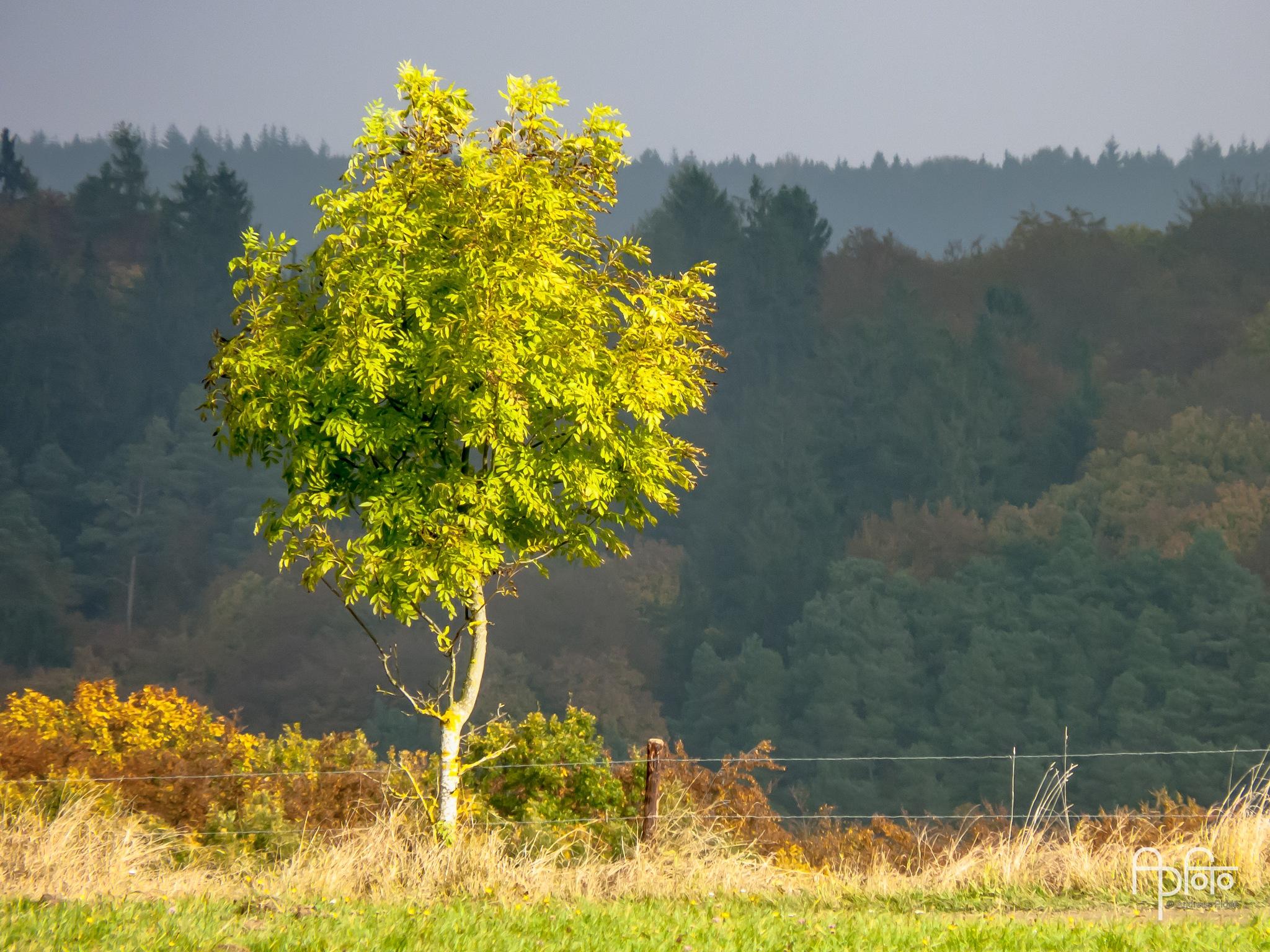 Autumn Tree by Andreas Pidde