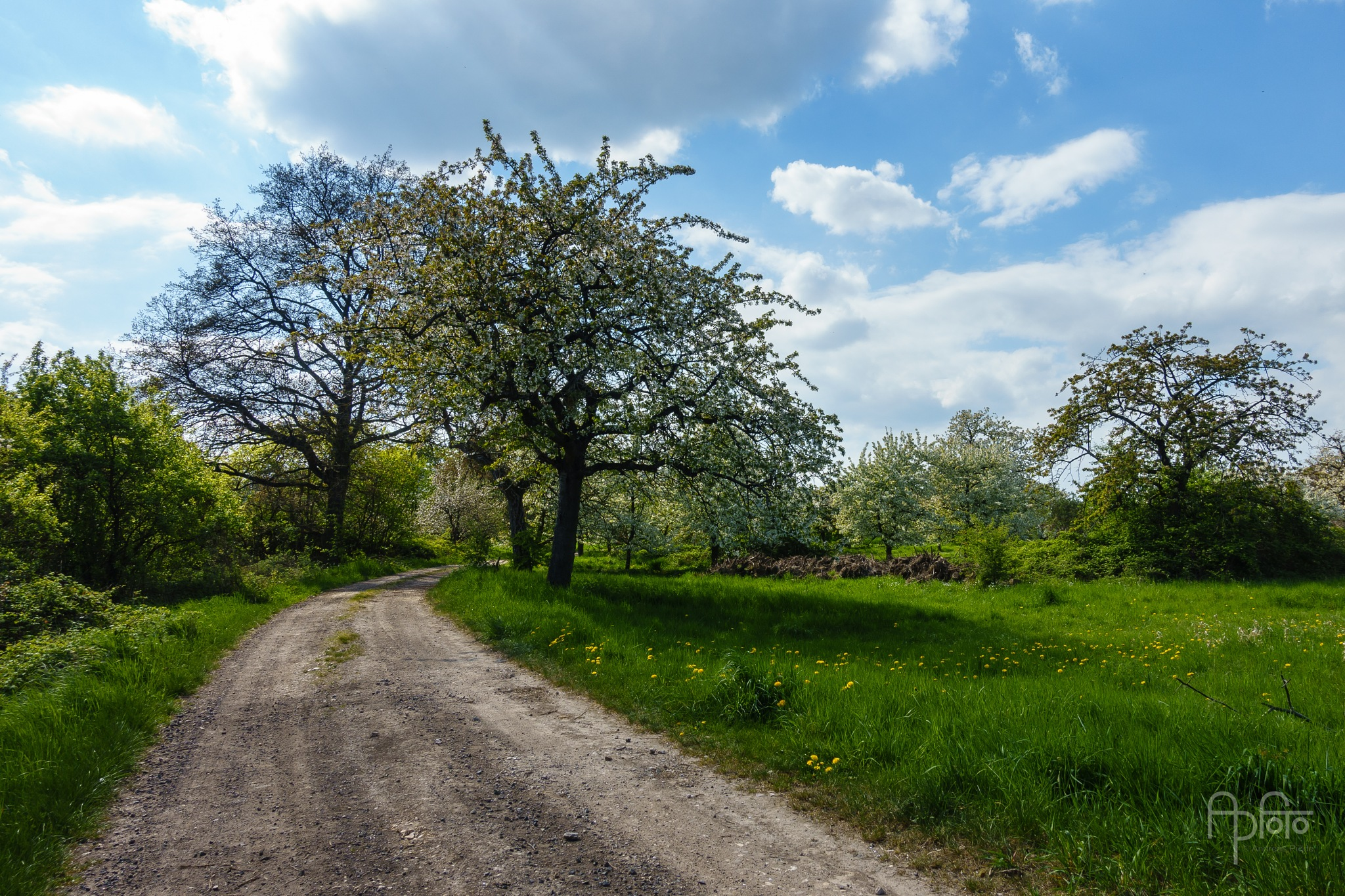 Way Through the Orchards by Andreas Pidde