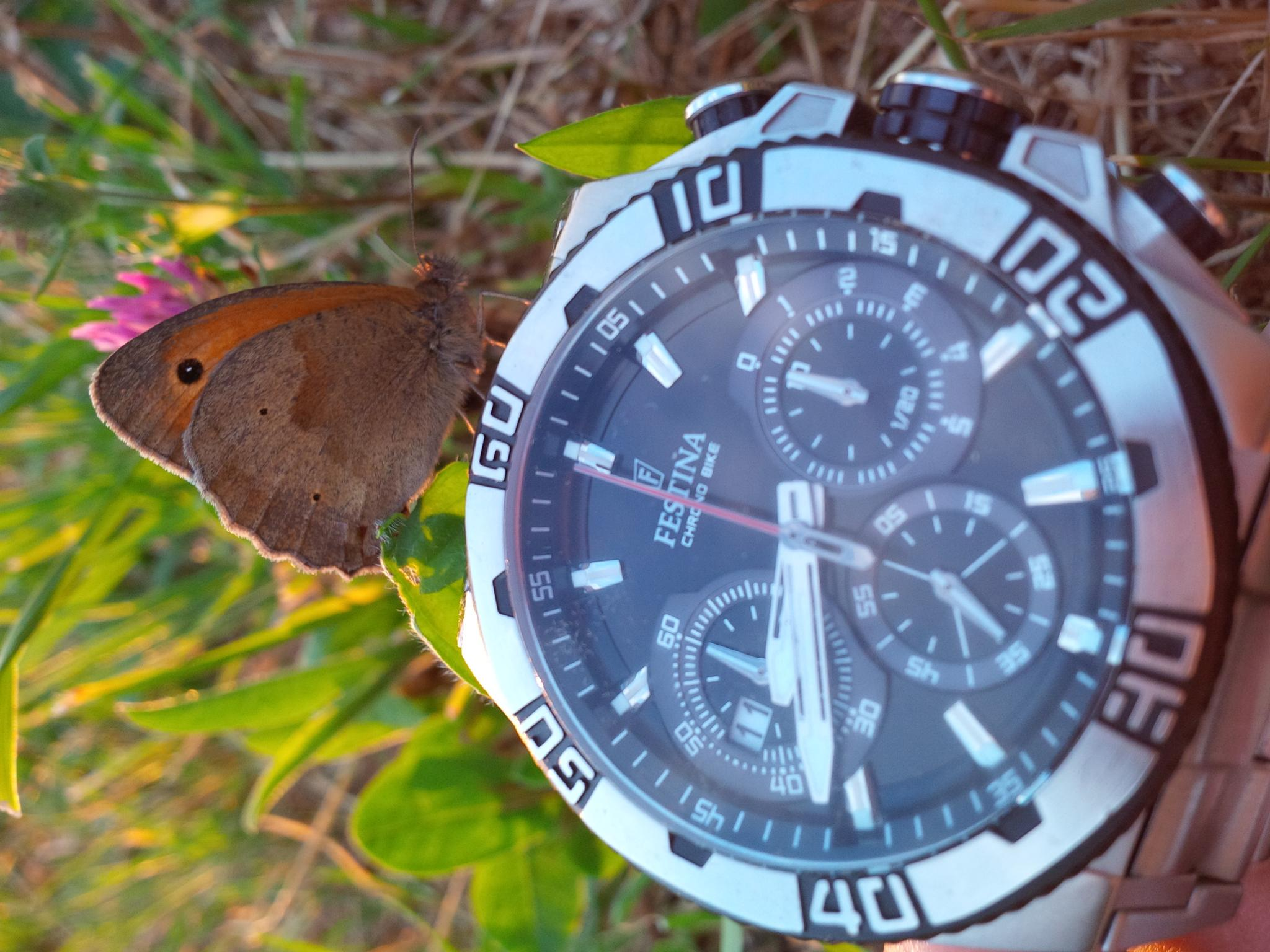 Here another little friend on my watch. It was so cool this summer !  by Oliver Brecht