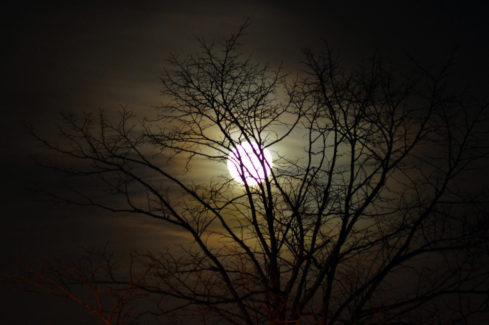 Moon by tarikkilic