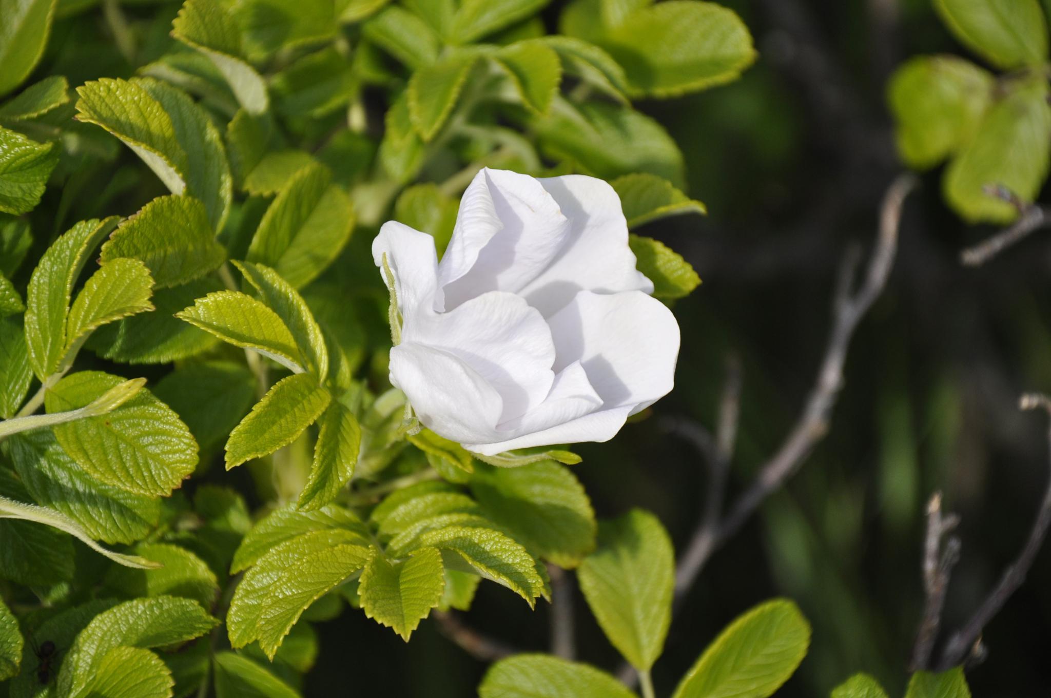 Flower by tarikkilic