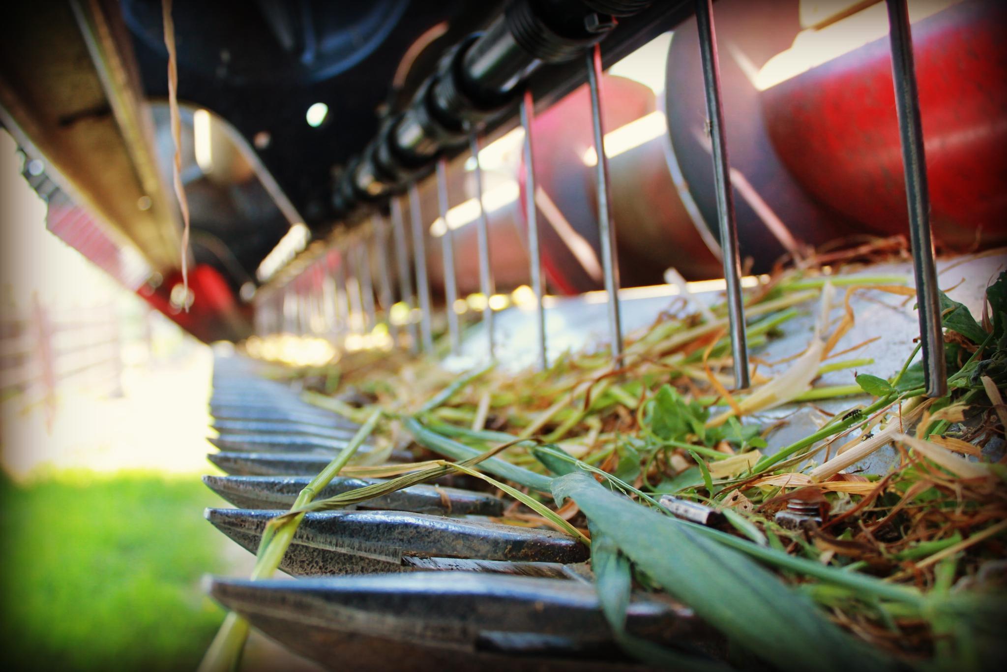 Farming season by Patti Holmes