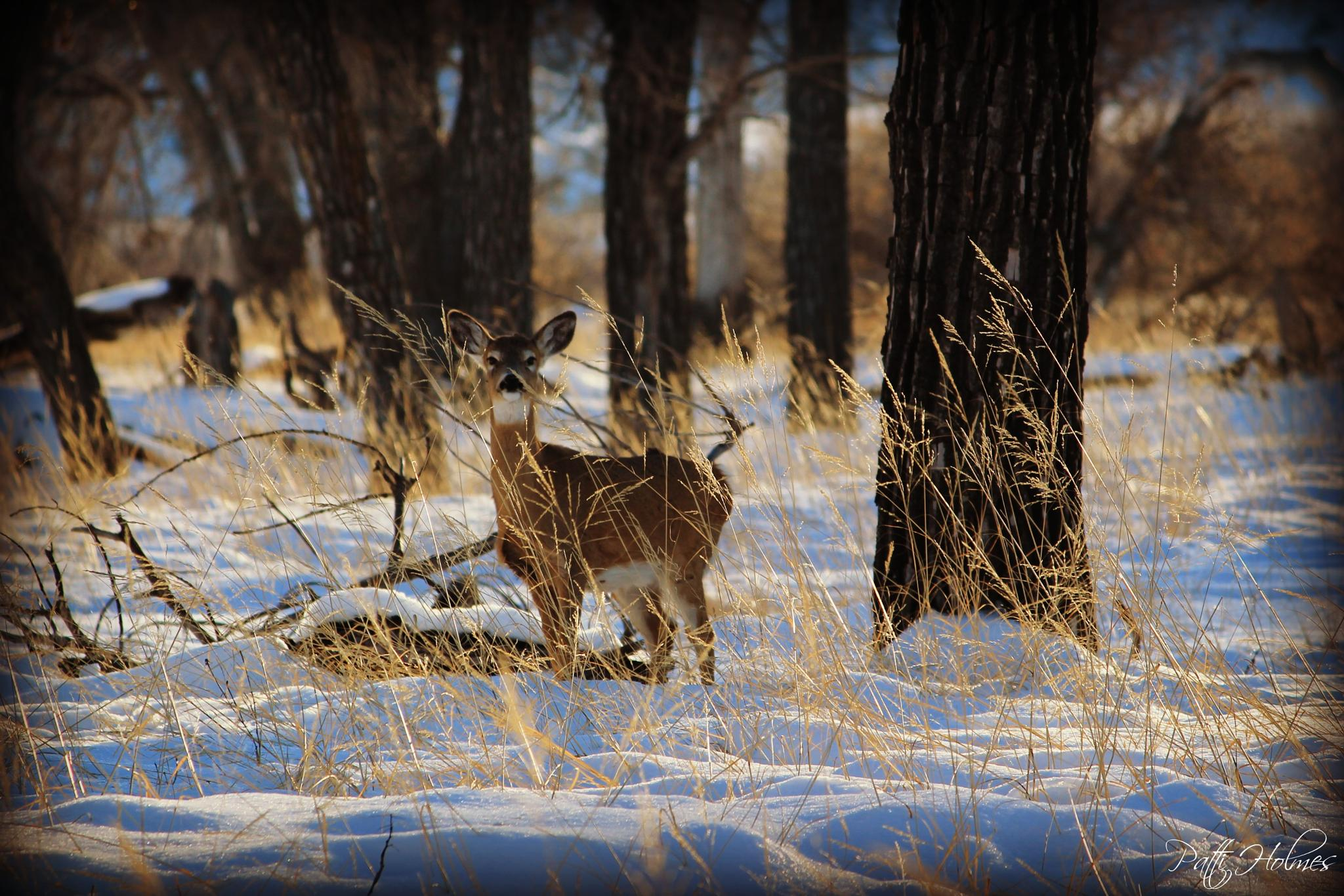 Winter visitor by Patti Holmes