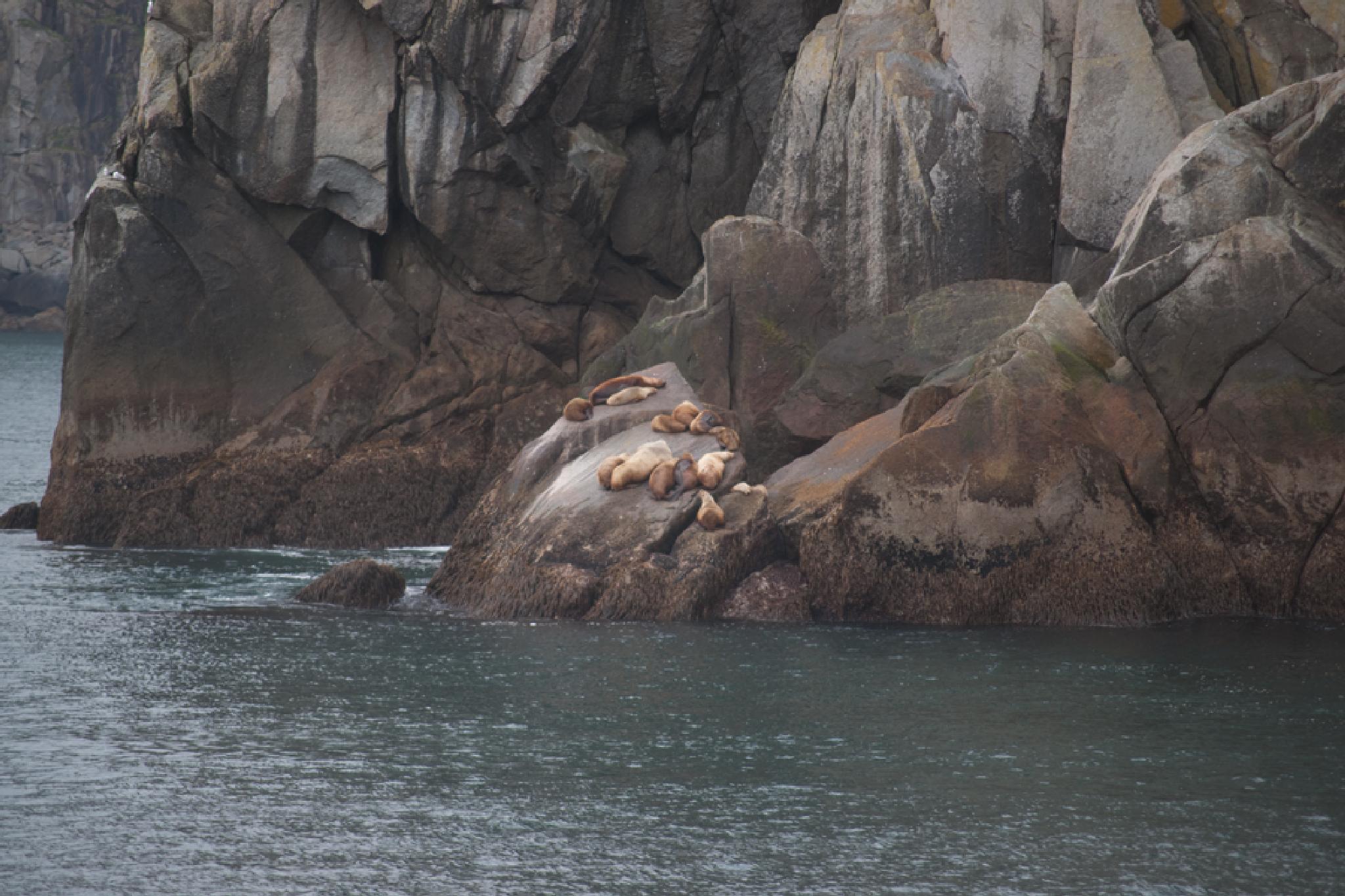 Seals napping by debra.louden1