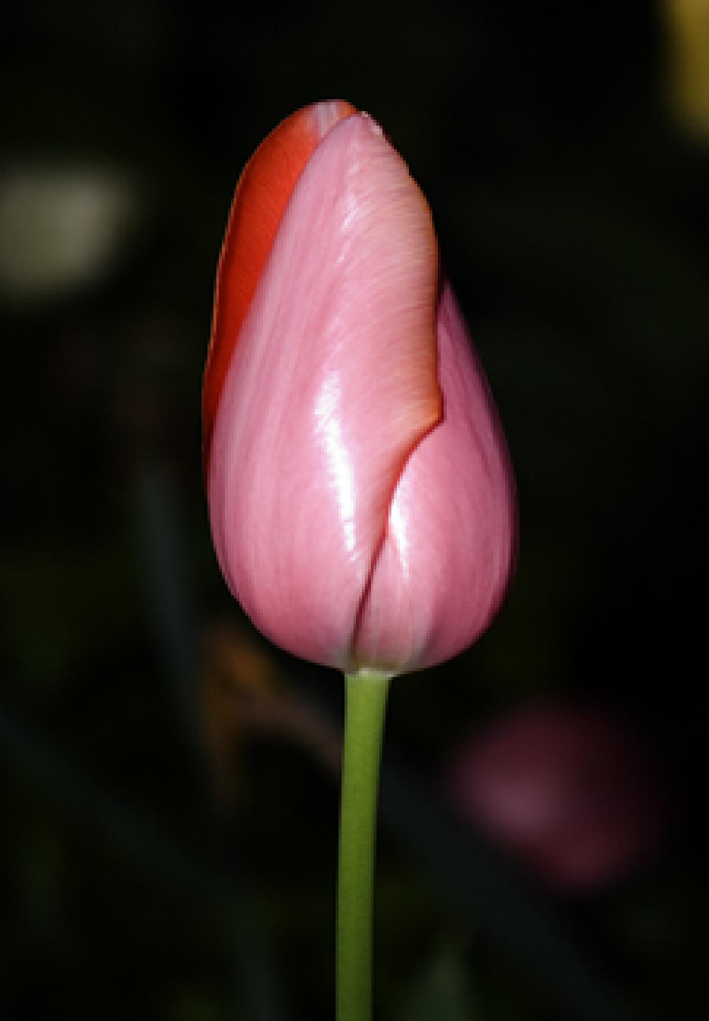 Red bloom by debra.louden1