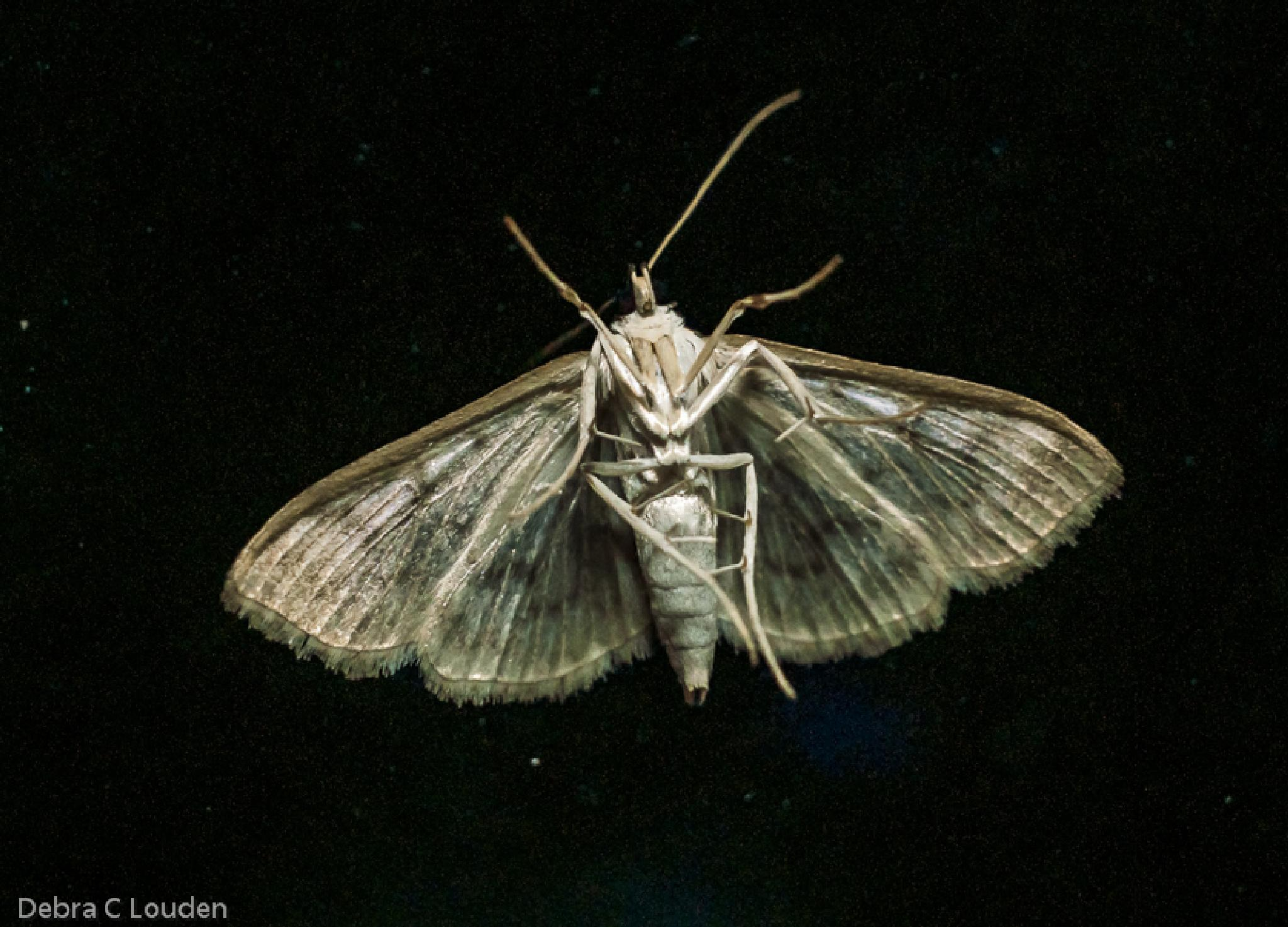 Photo in Animal #ballerina #moth #legs #ballet #insect