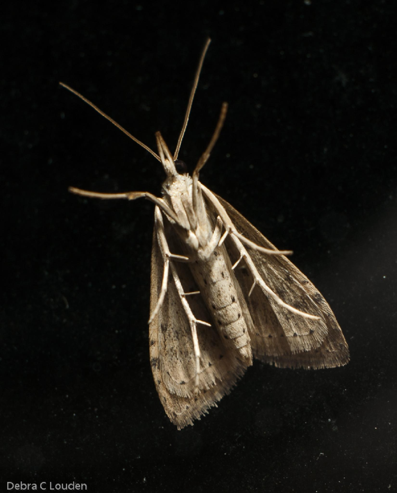 Photo in Animal #star wars #moth #insect #underside