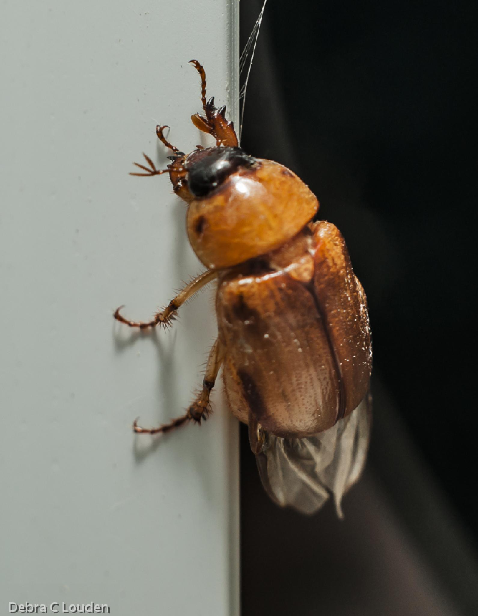 Bug on the wall by debra.louden1